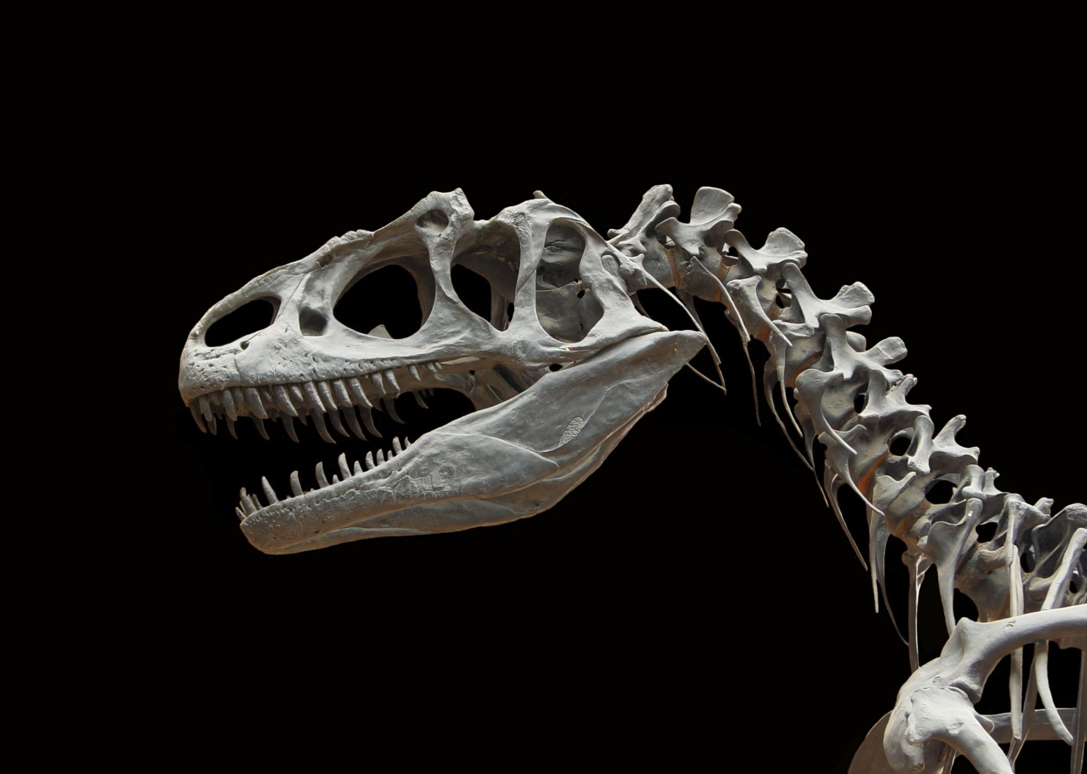 101+ Gambar Tulang Dinosaurus HD