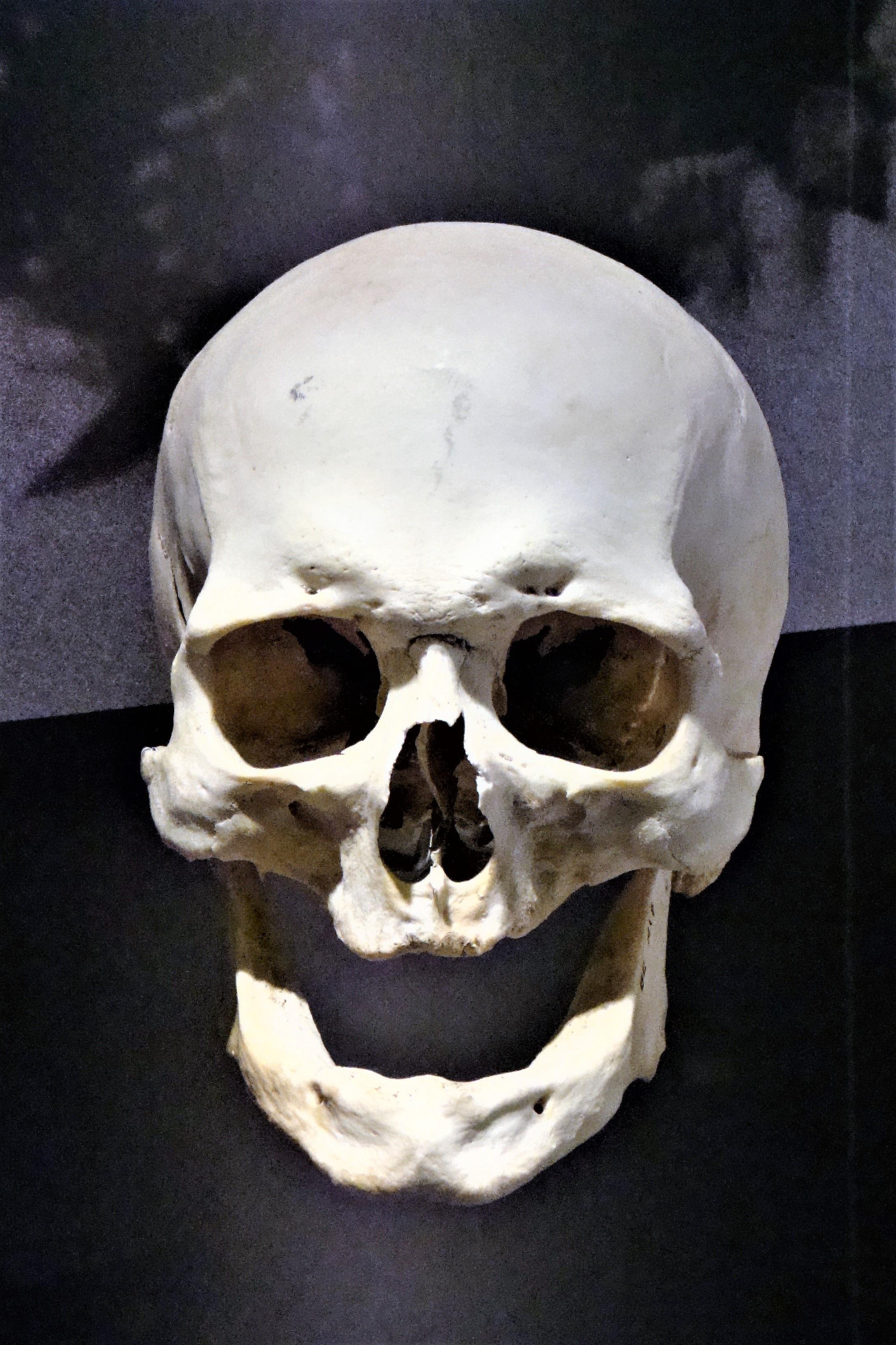 Free Images Bone Head Weird Creepy Skeleton Skull And