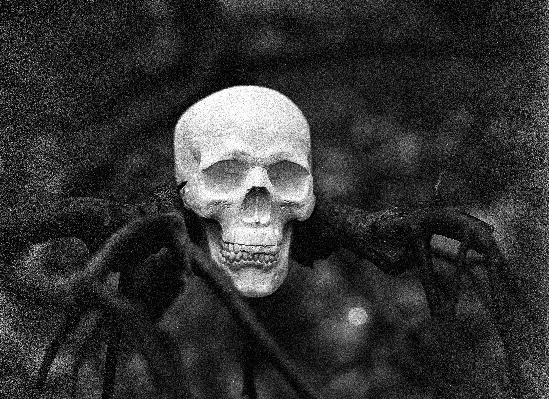 Fotos gratis : cráneo, árbol, Víspera de Todos los Santos, horror ...