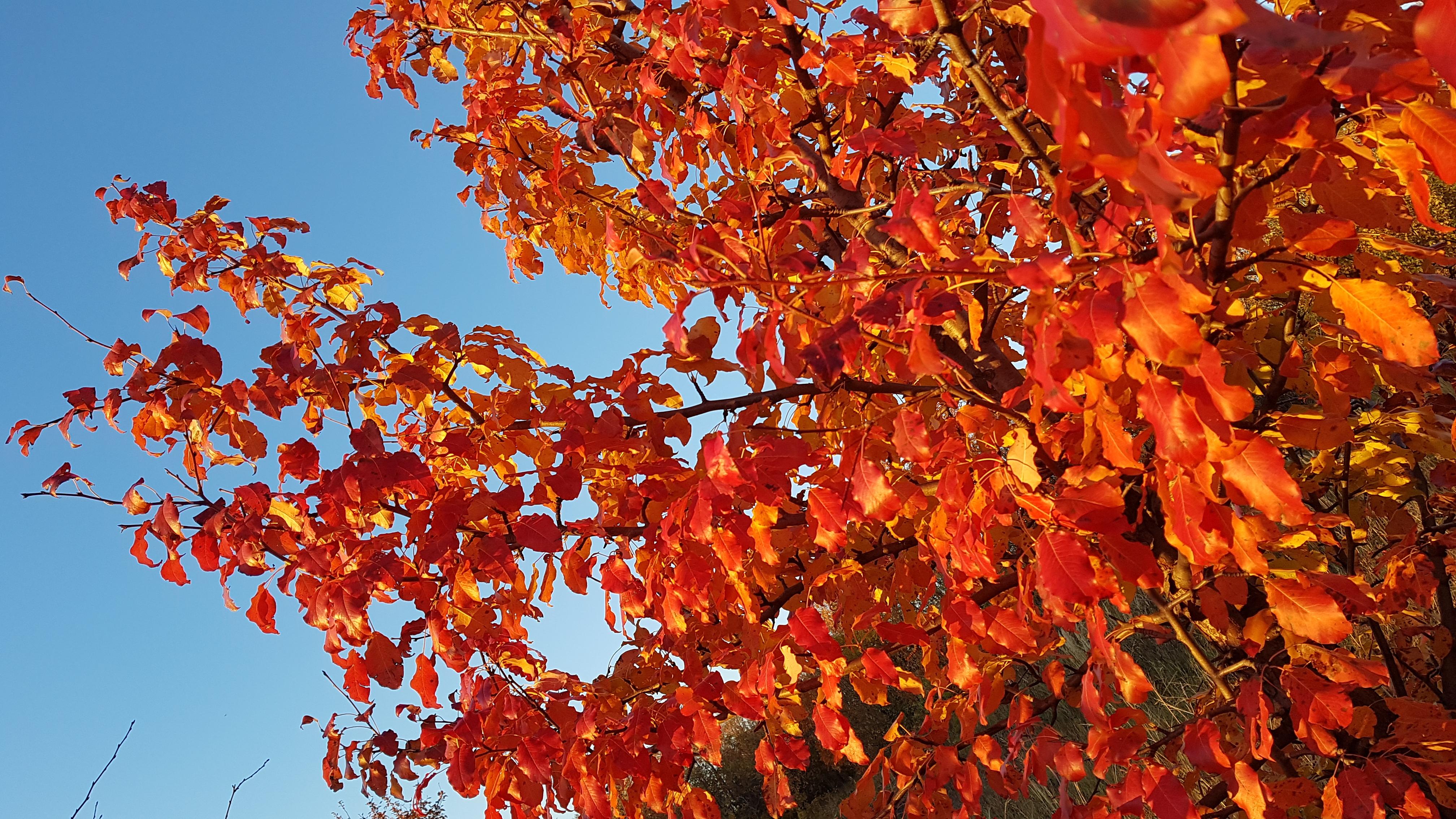 images gratuites : ciel, l'automne, feuilles d'automne, feuilles
