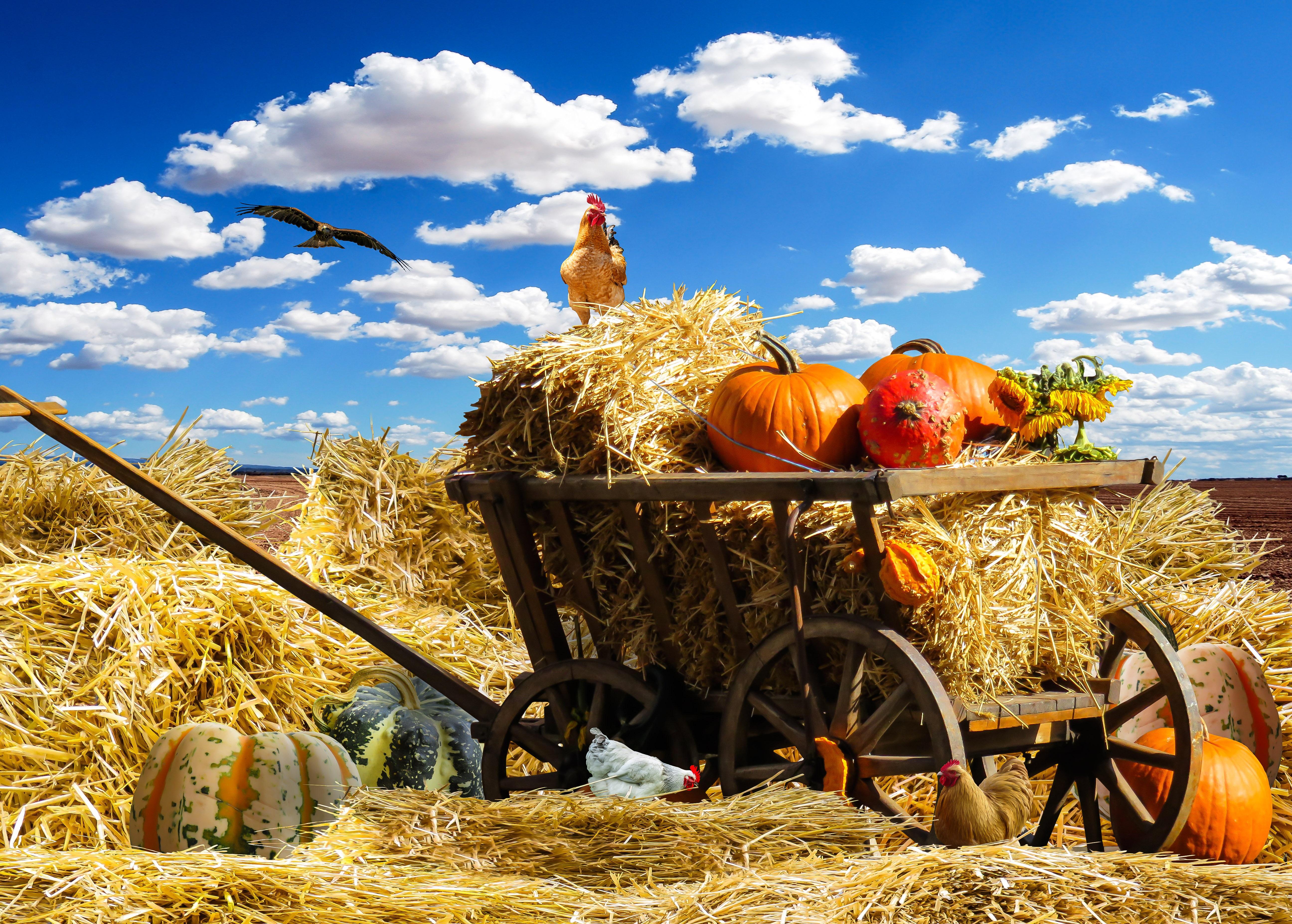 надеемся, красивые картинки сельского хозяйства кованных