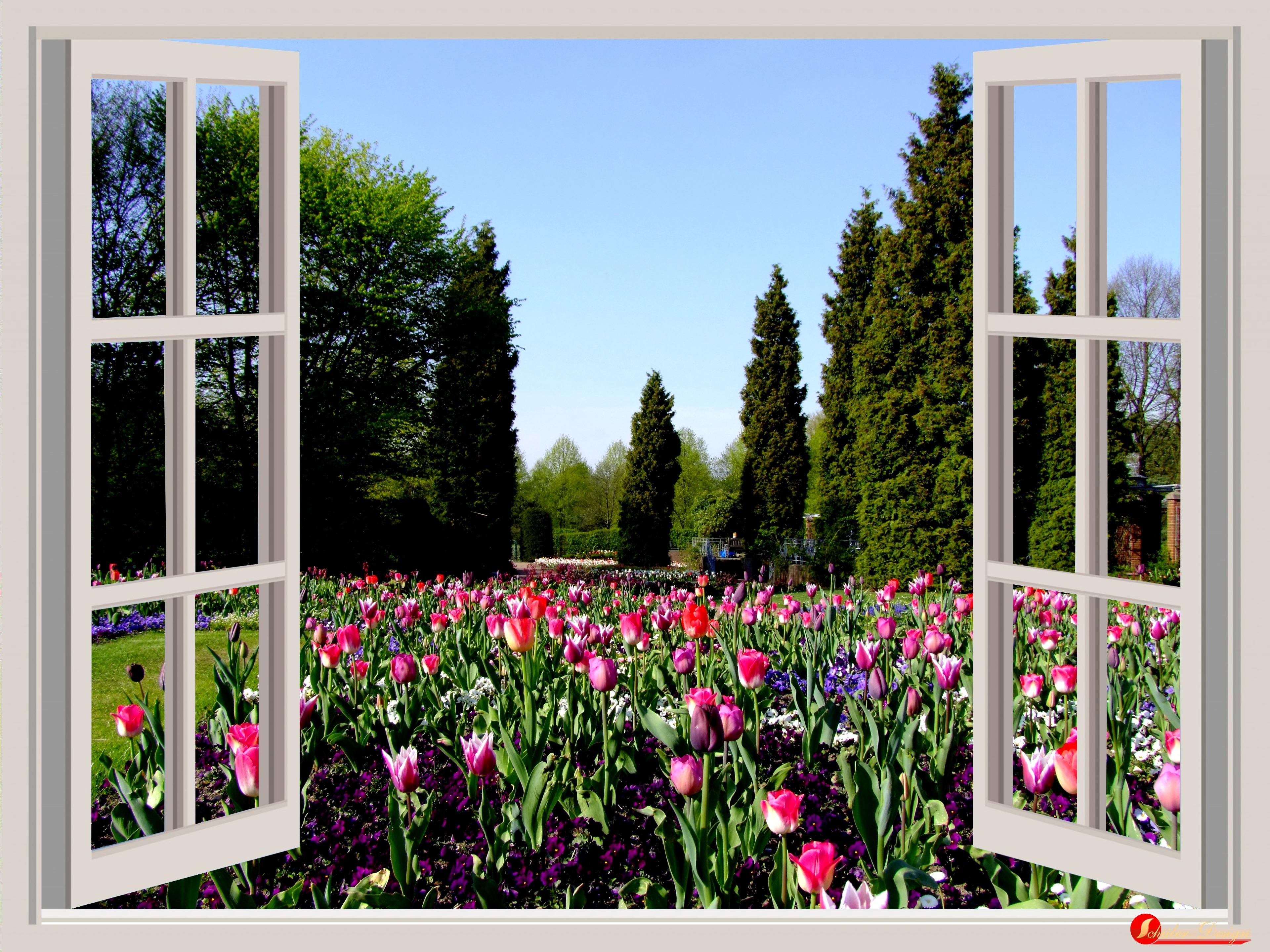 Unduh 410+ Gambar Hamparan Bunga Tulip HD Terbaik