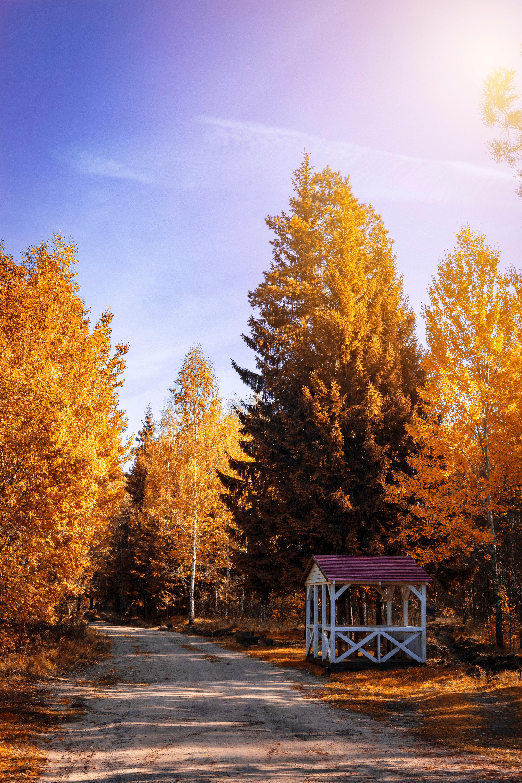無料画像 空 自然 秋 黄 朝 メイデンヘアの木 カラマツ 太陽