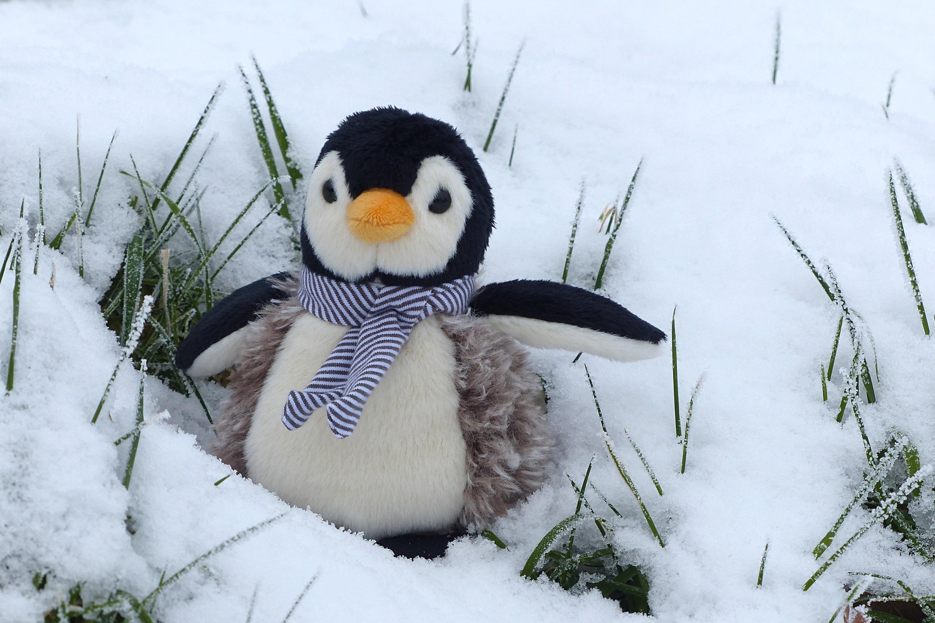 Snow Cold Winter Bird Cute Weather Penguin Snowman Stuffed Animal Flightless