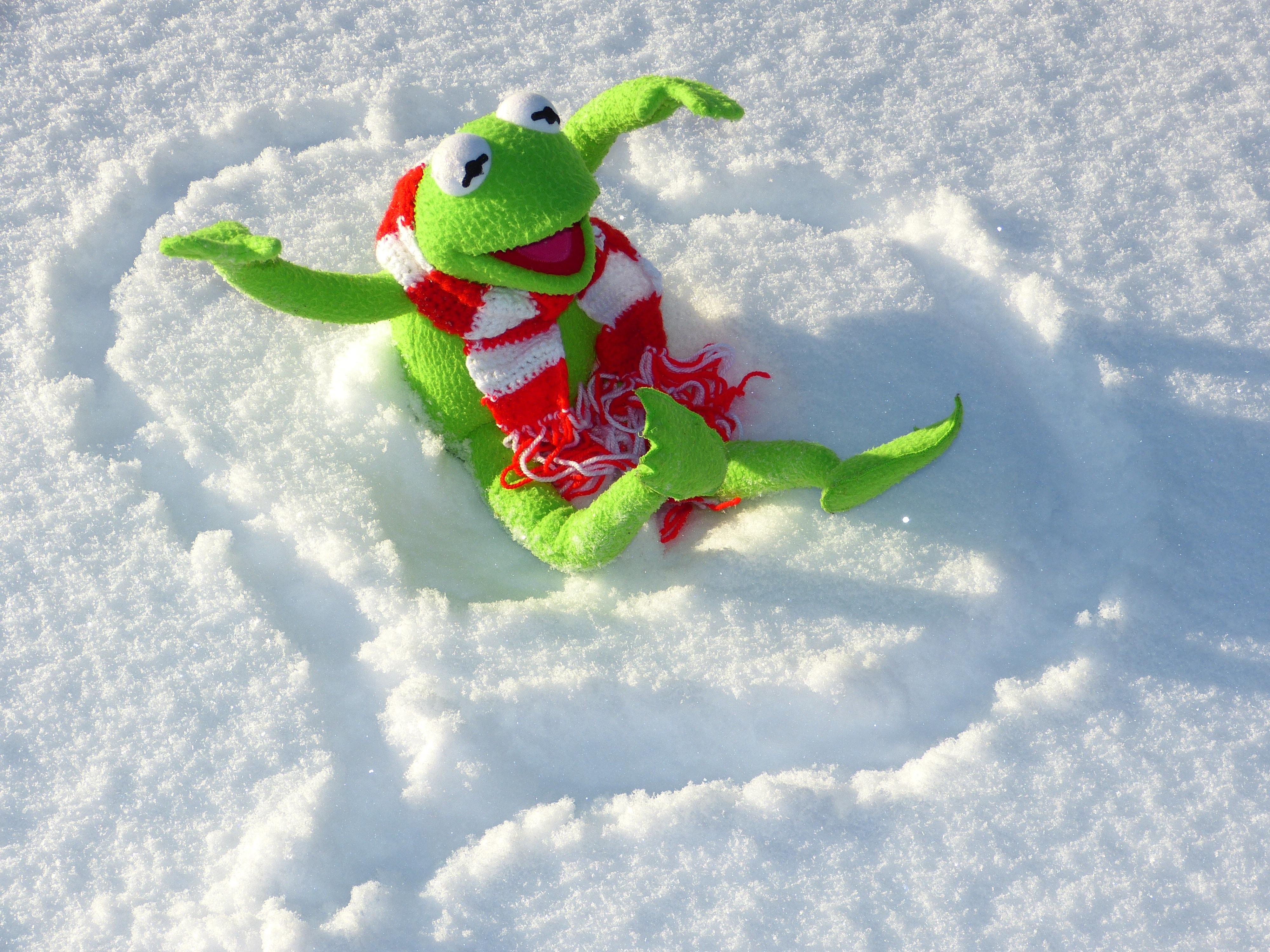 images gratuites neige du froid hiver grenouille sport extr me jouet sport d 39 hiver. Black Bedroom Furniture Sets. Home Design Ideas