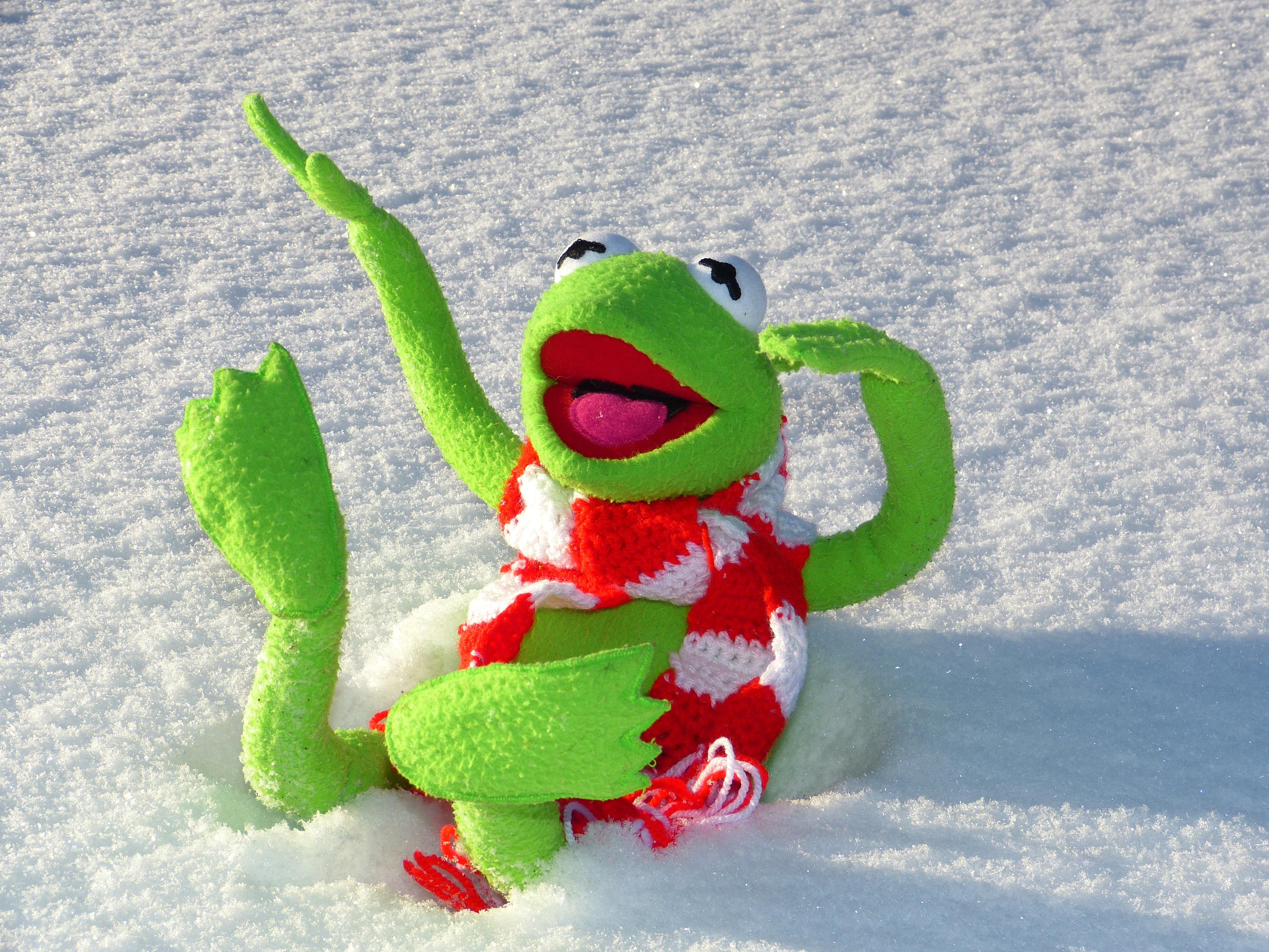 Fotos gratis : nieve, frío, invierno, verde, rana, anfibio, juguete ...