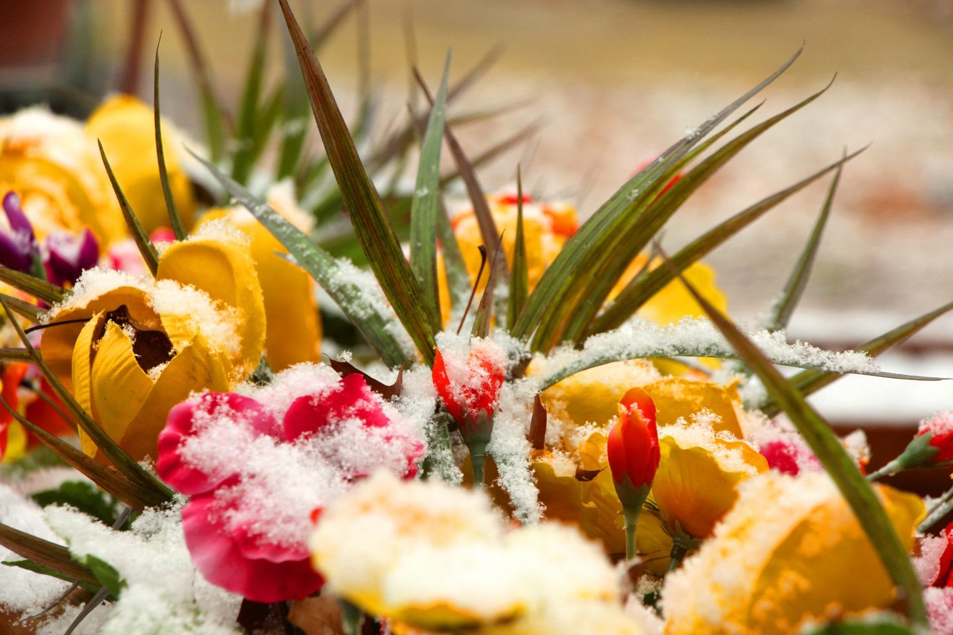 Цветы зимой картинки, елочки открыток пожелания