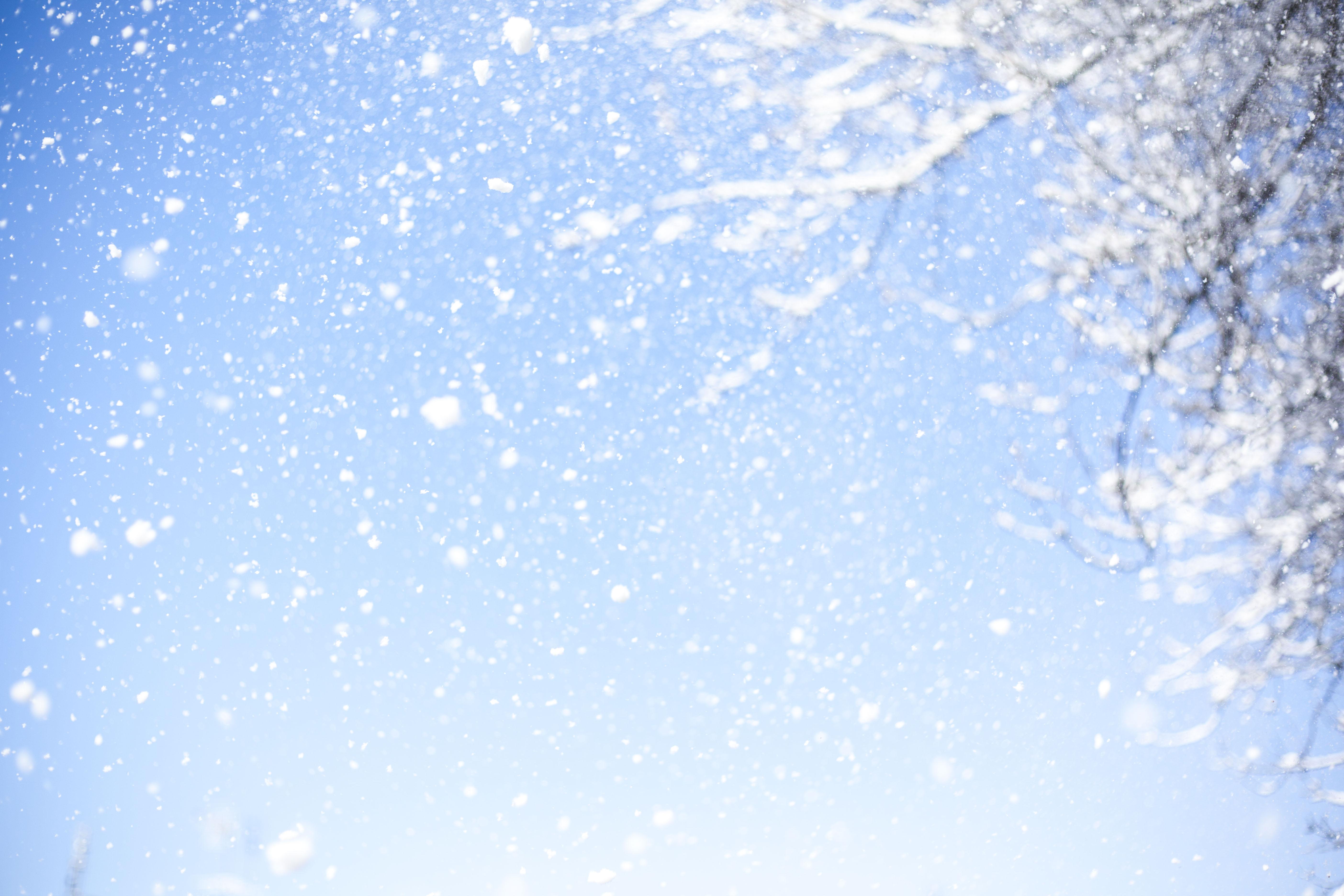 無料画像 フレーク 木 空色 自然 冬 白 雪片 夢 晴れた日
