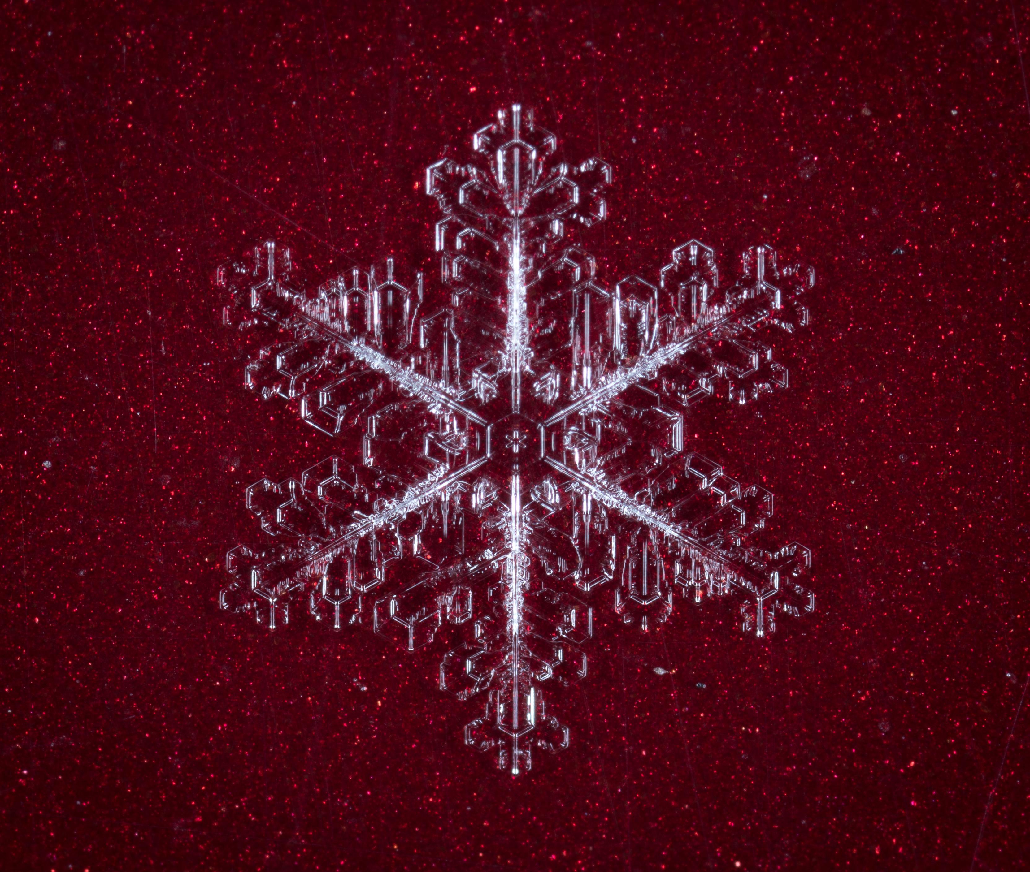 Kostenlose foto : Schnee, Makro, Schneeflocke, Computer-Tapete ...