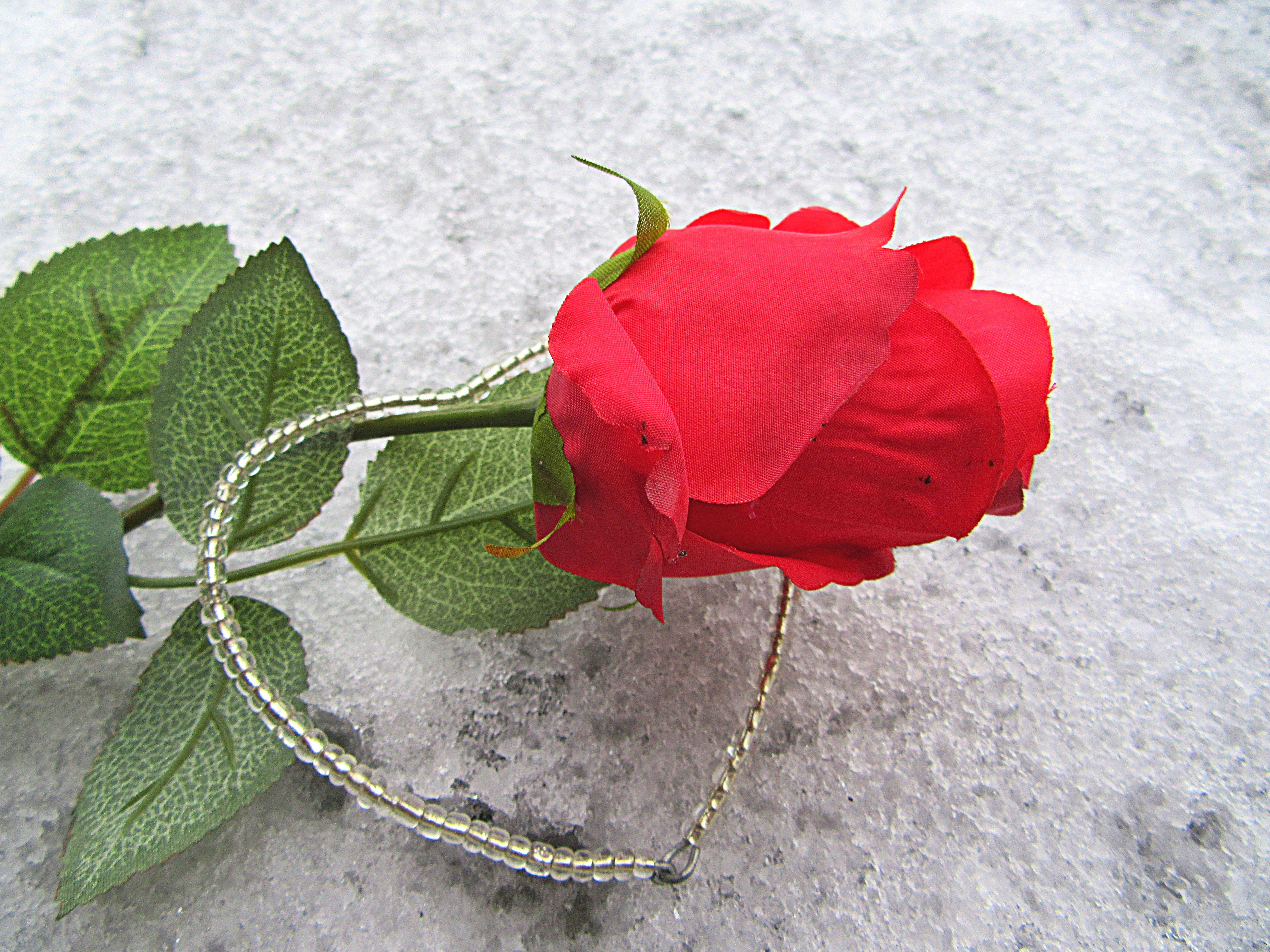 Gambar Salju Menanam Daun Bunga Dekorasi Merah Percintaan