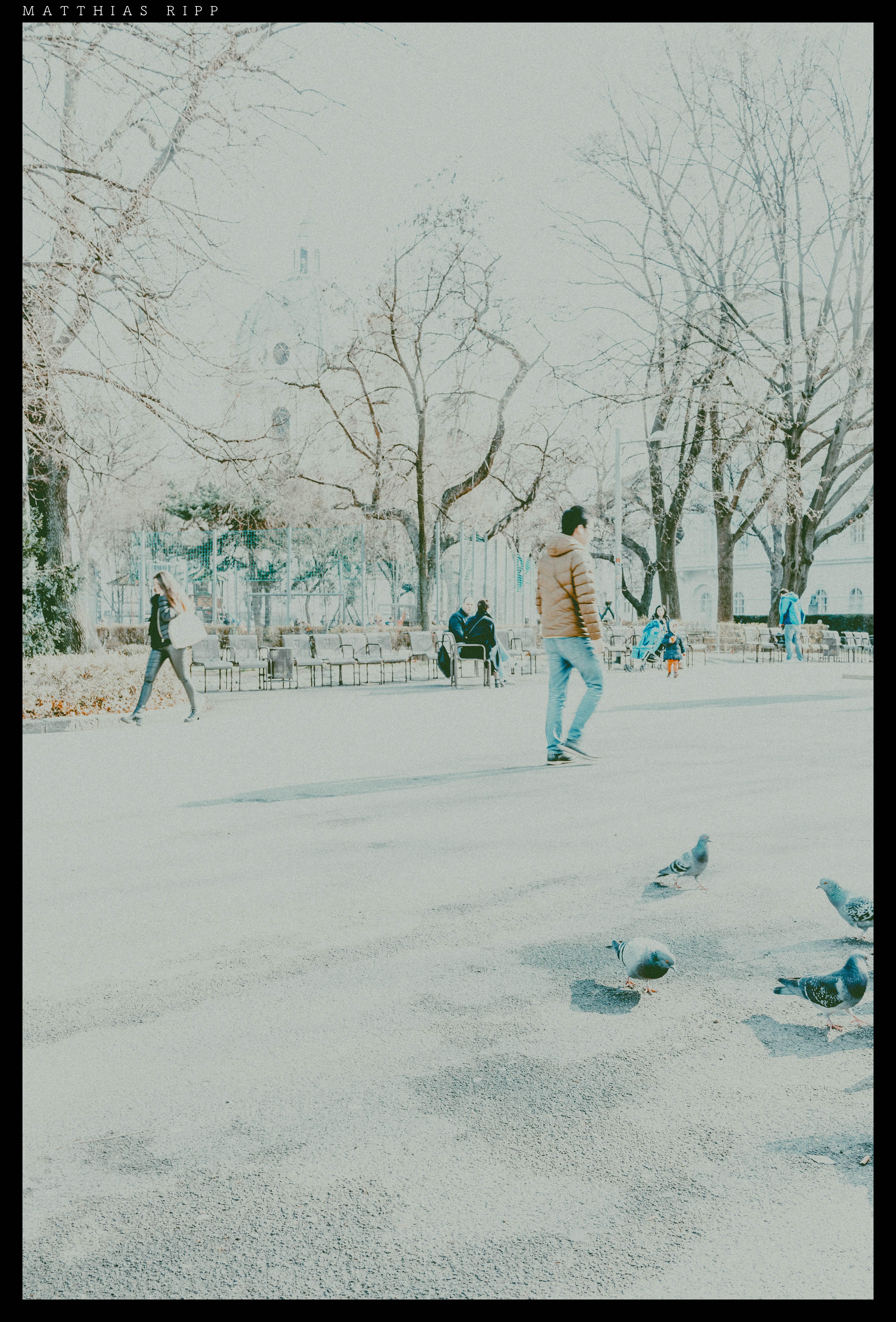 Fotoğraf Kar Kış Soyut Beyaz Sokak şehir Hayvan Kentsel
