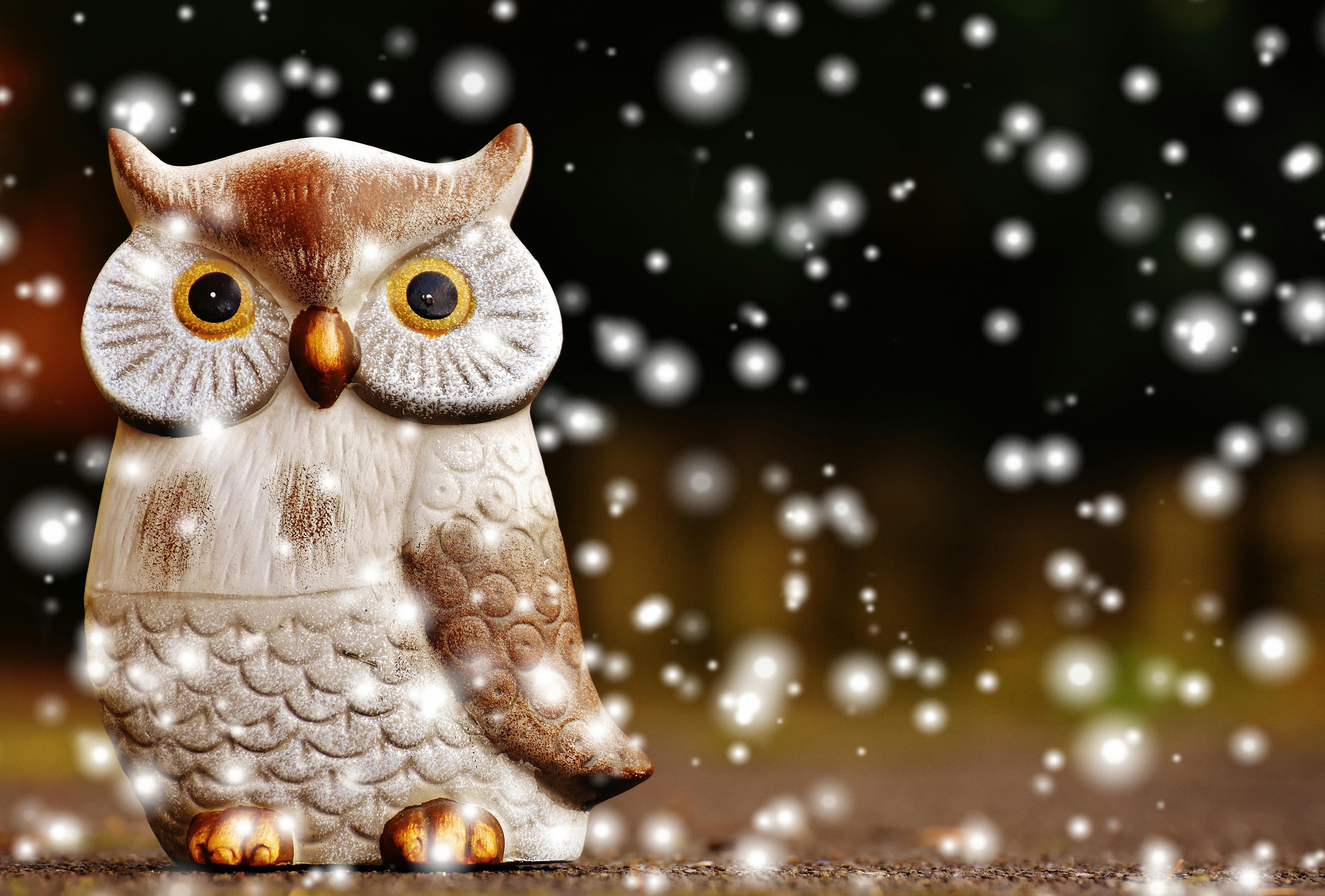owl winter bird animal - photo #6