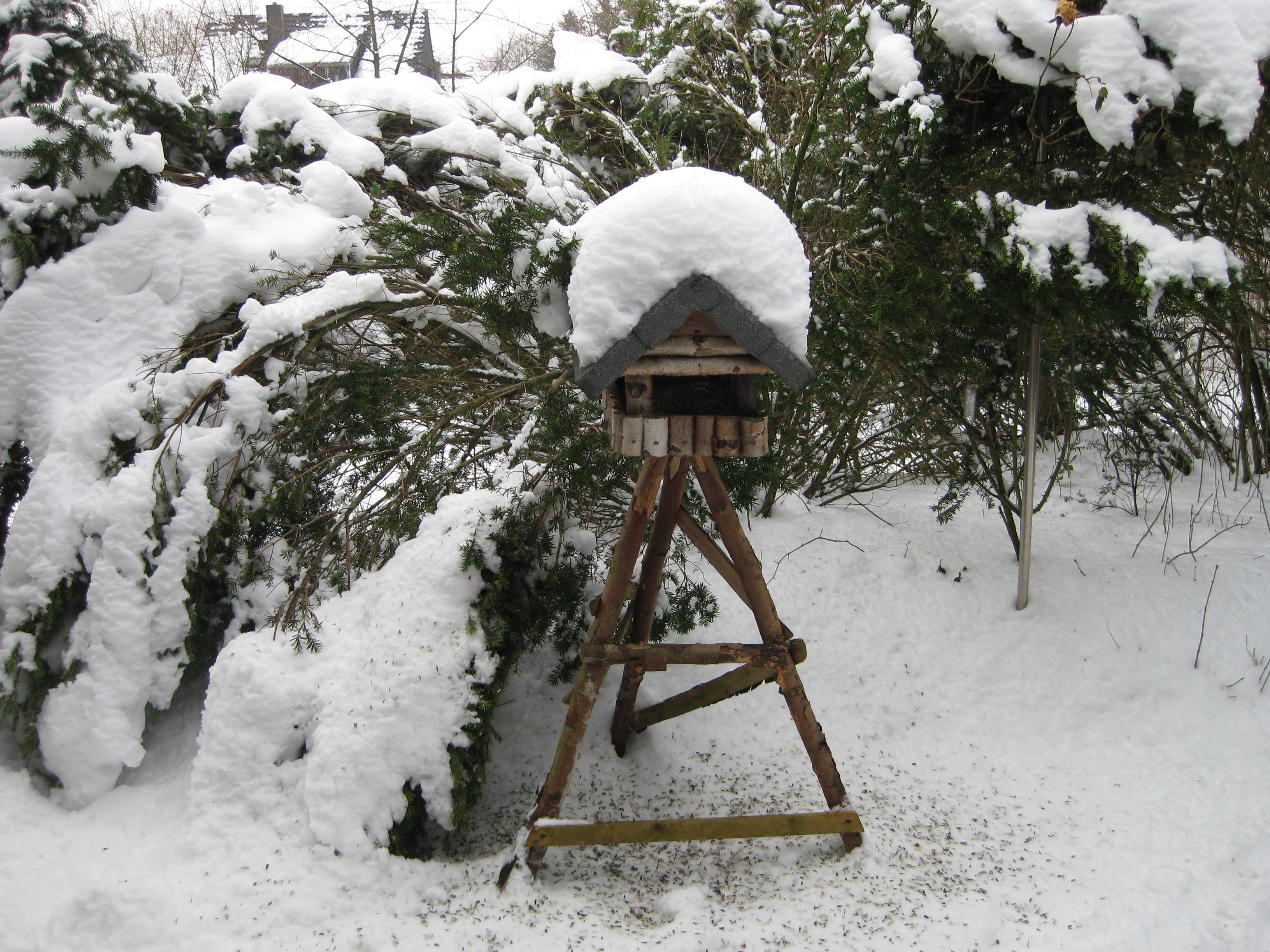 gratis afbeeldingen sneeuw winter vogel weer seizoen voeden voli re ijskoud 3264x2448. Black Bedroom Furniture Sets. Home Design Ideas