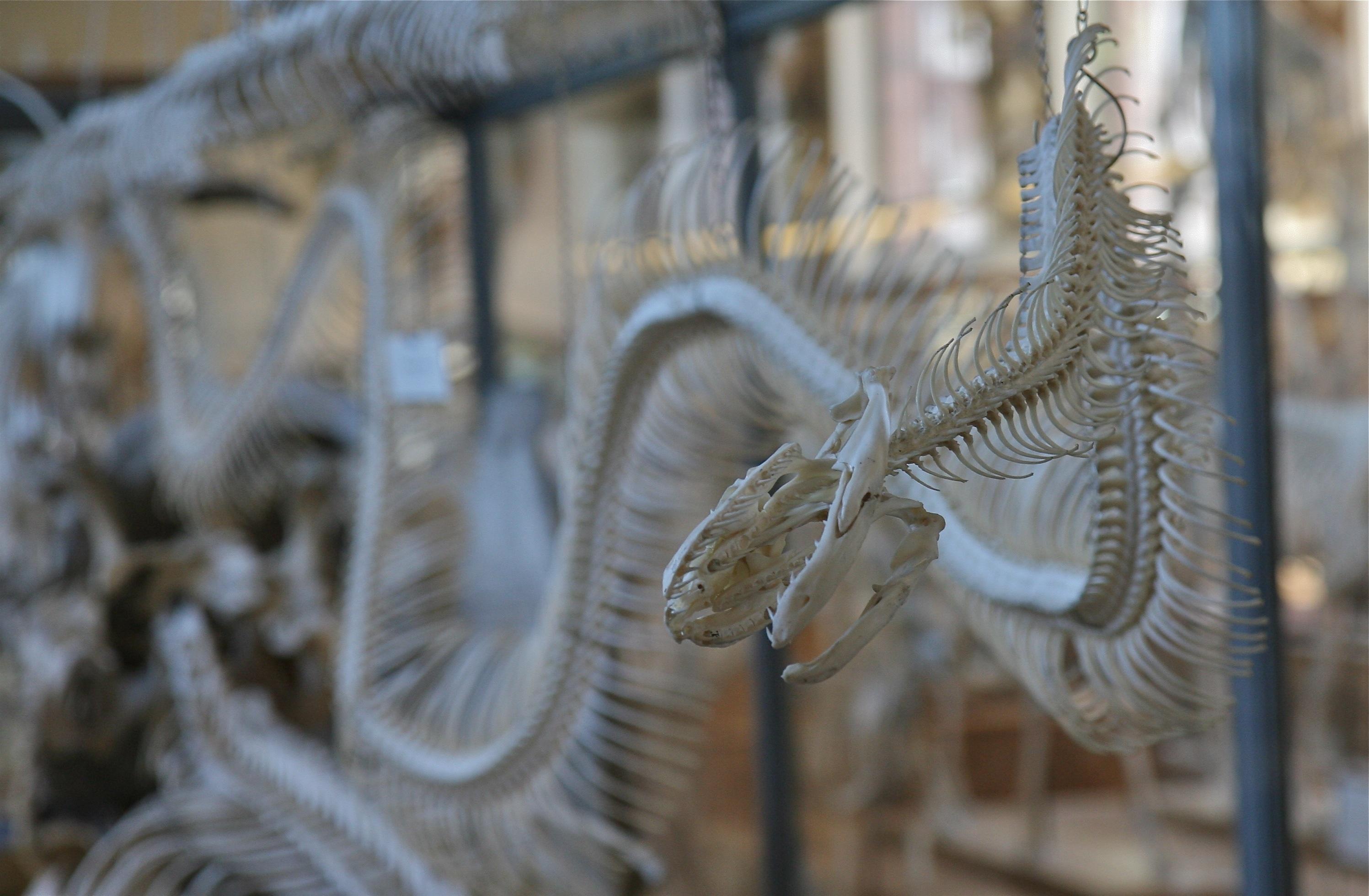 Fotos gratis : nieve, invierno, pájaro, blanco, escarcha, bicicleta ...