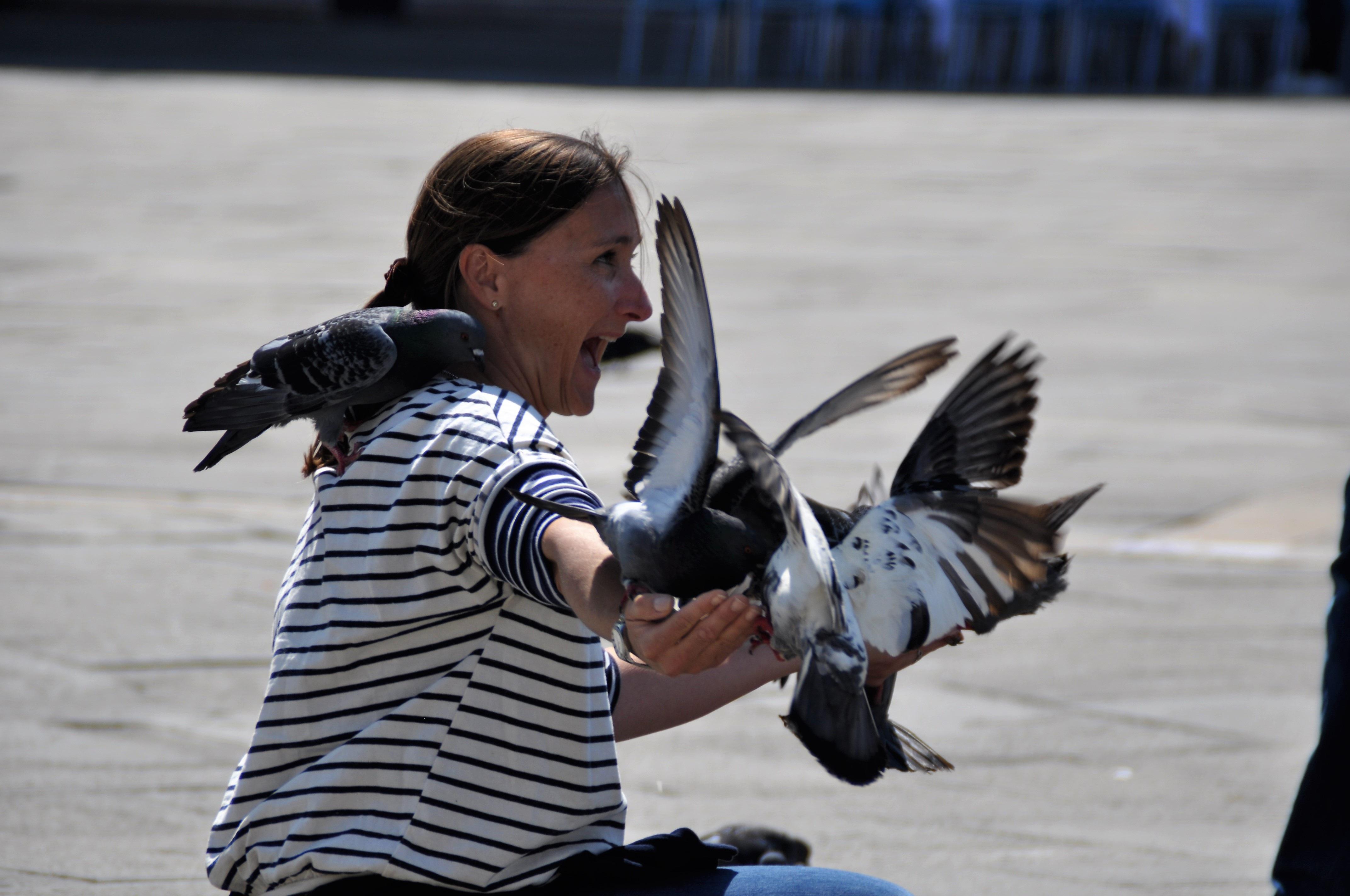 Fotografie vtáky v destinácii gayvidios
