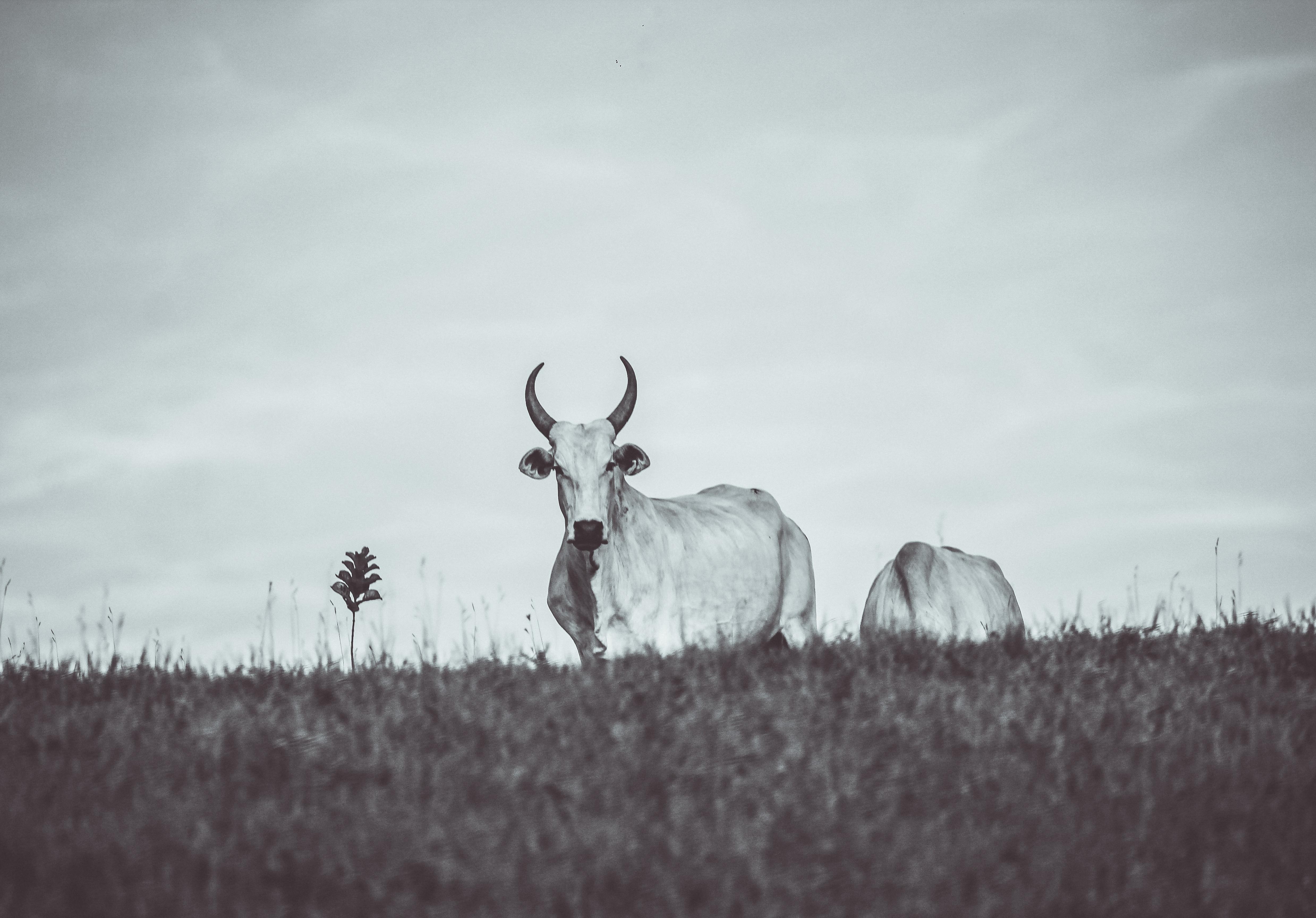 Snow winter black and white wildlife deer mammal monochrome fauna reindeer monochrome photography atmospheric phenomenon