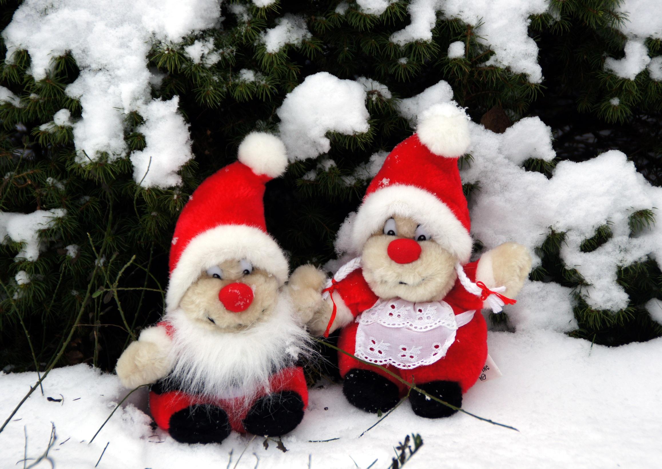Gratis Afbeeldingen : sneeuw, winter, schattig, pijnboom, Kerstmis