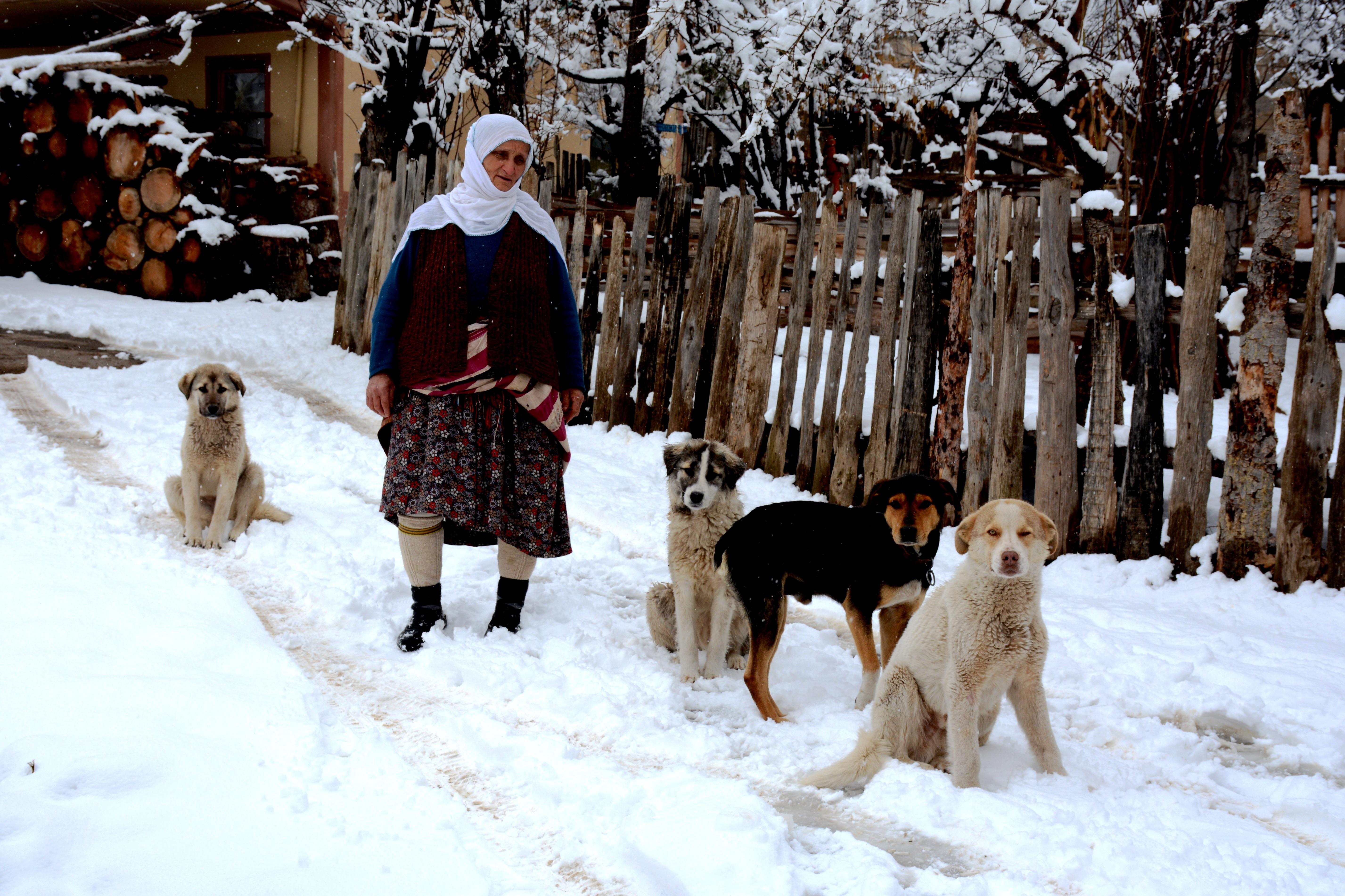 무료 이미지 눈 겨울 개 동물 마을 날씨 시즌 터키