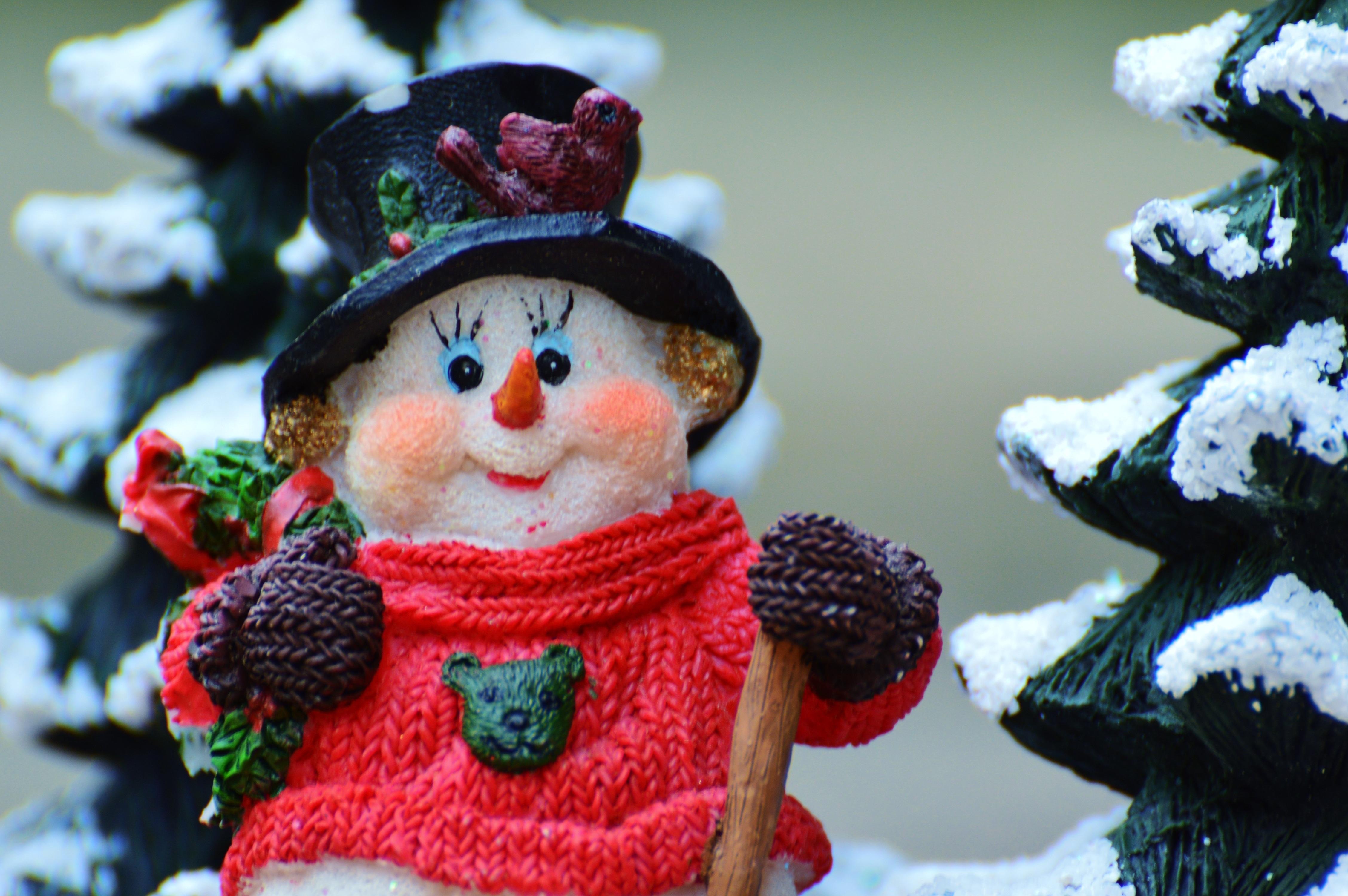 Kostenlose Foto Schnee Winter Blume Dekoration Weihnachten