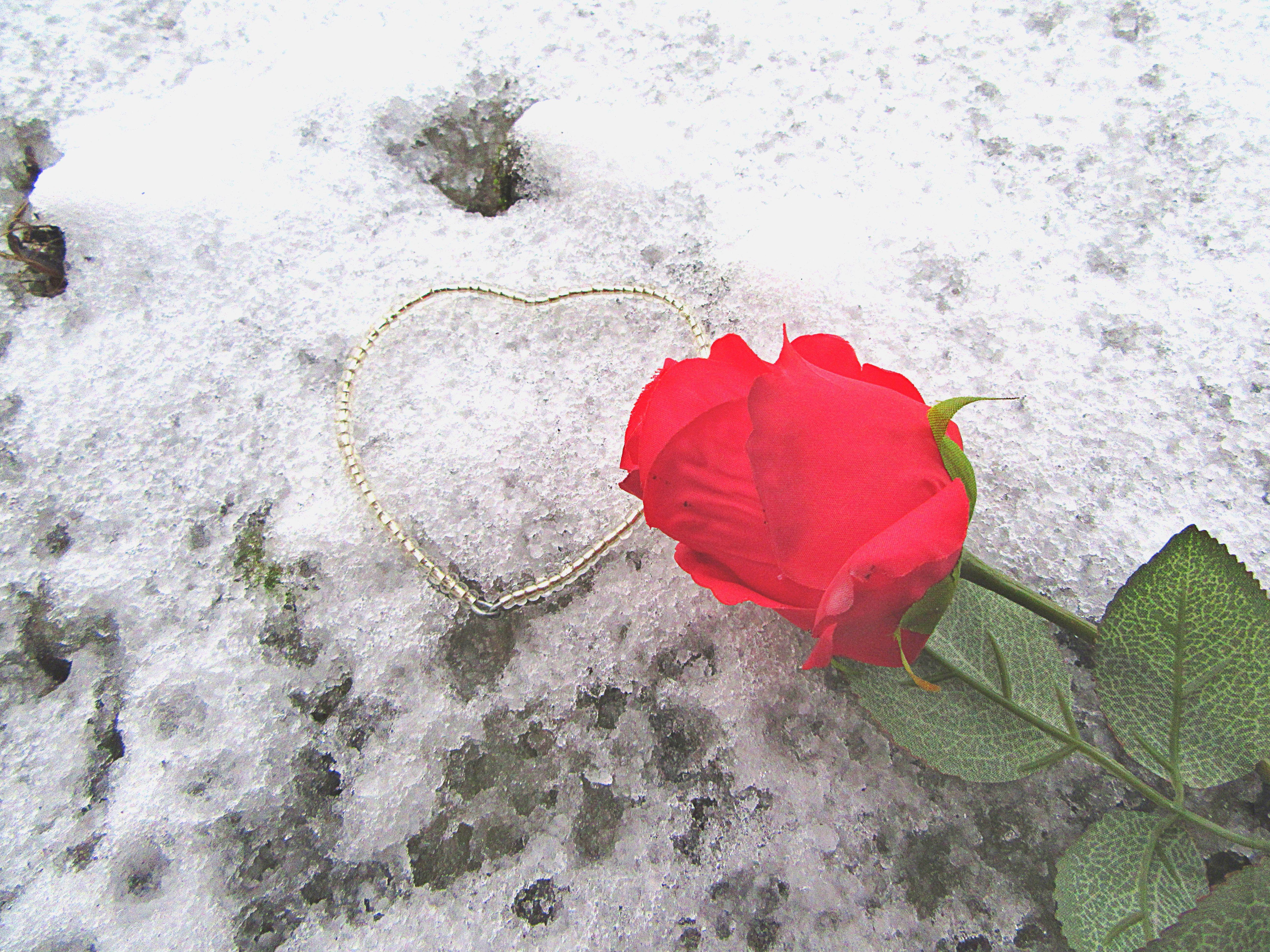 Gambar Salju Musim Dingin Menanam Daun Bunga Suasana