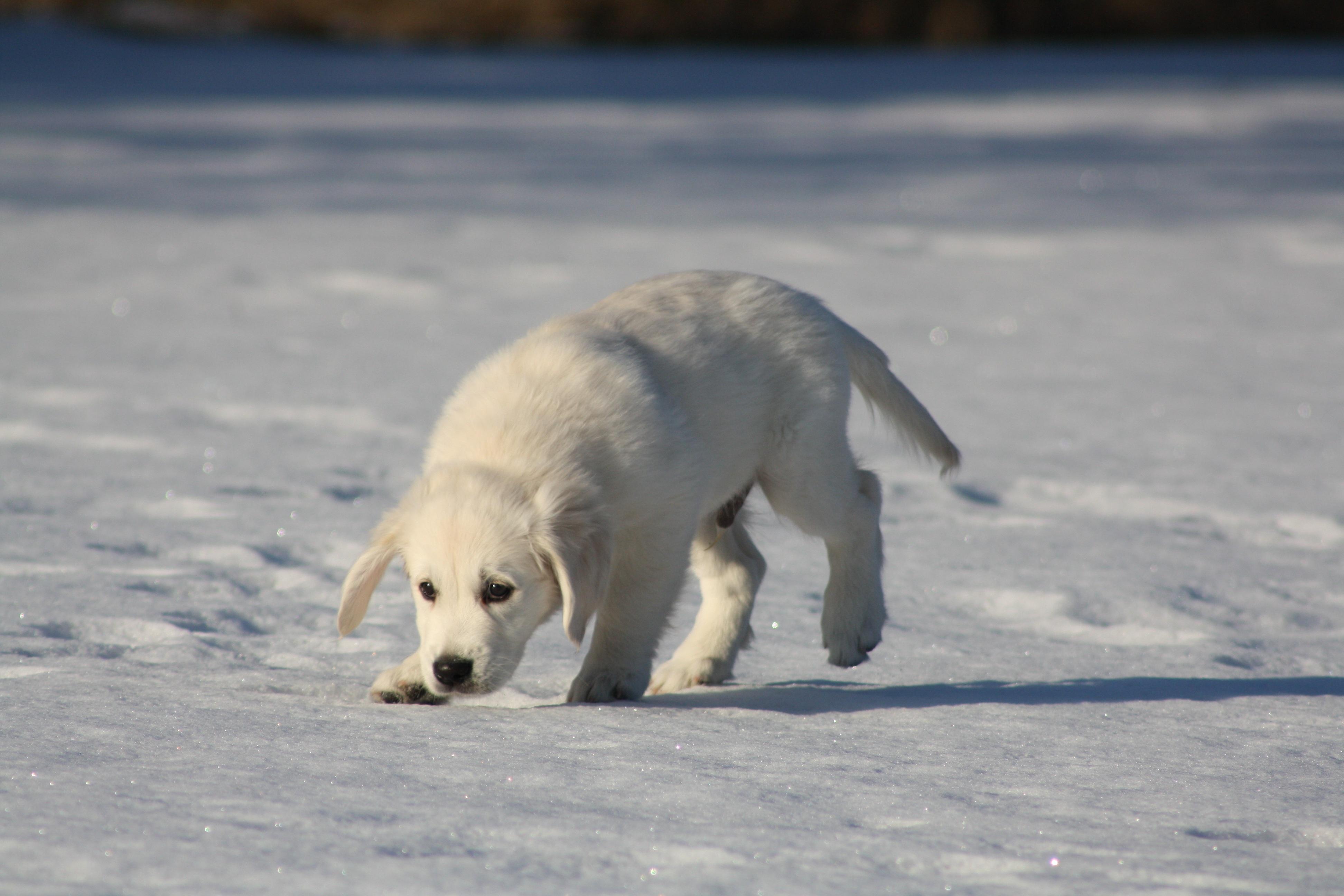 Kostenlose Foto Schnee Winter Welpe Bär Tierwelt Eis Jung