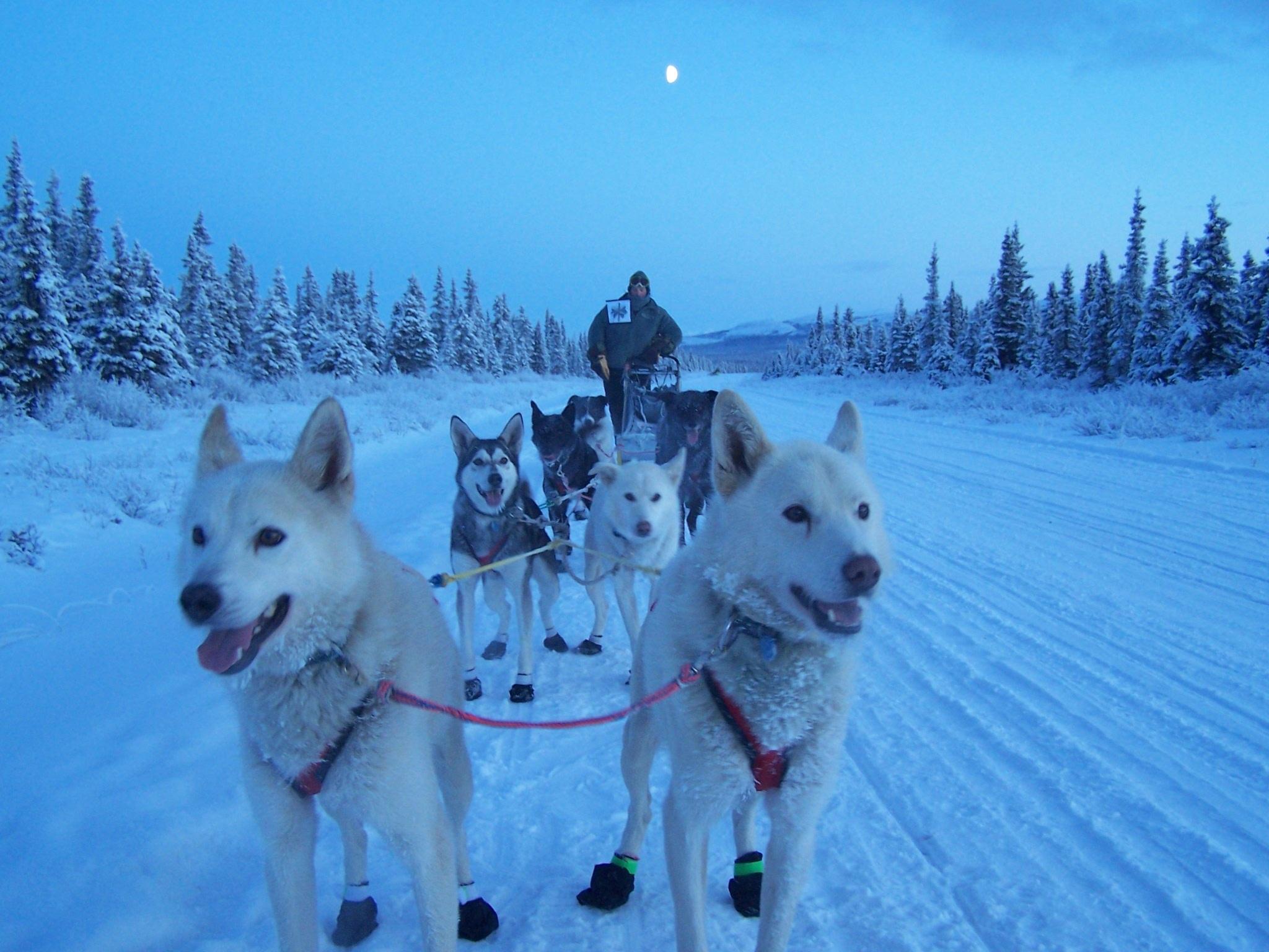 Картинки собаки на севере