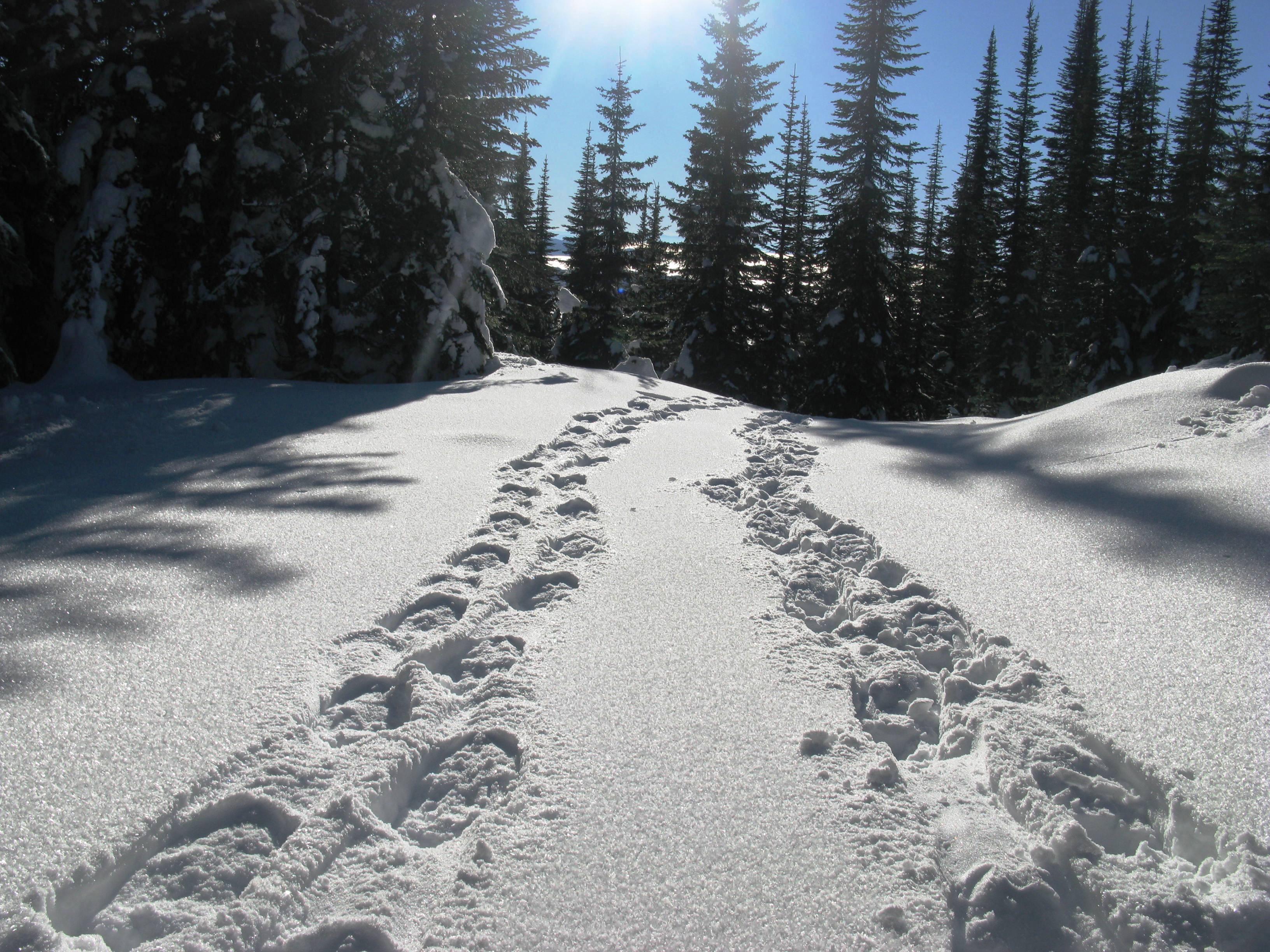 следы двоих на снегу картинки предметы интерьера