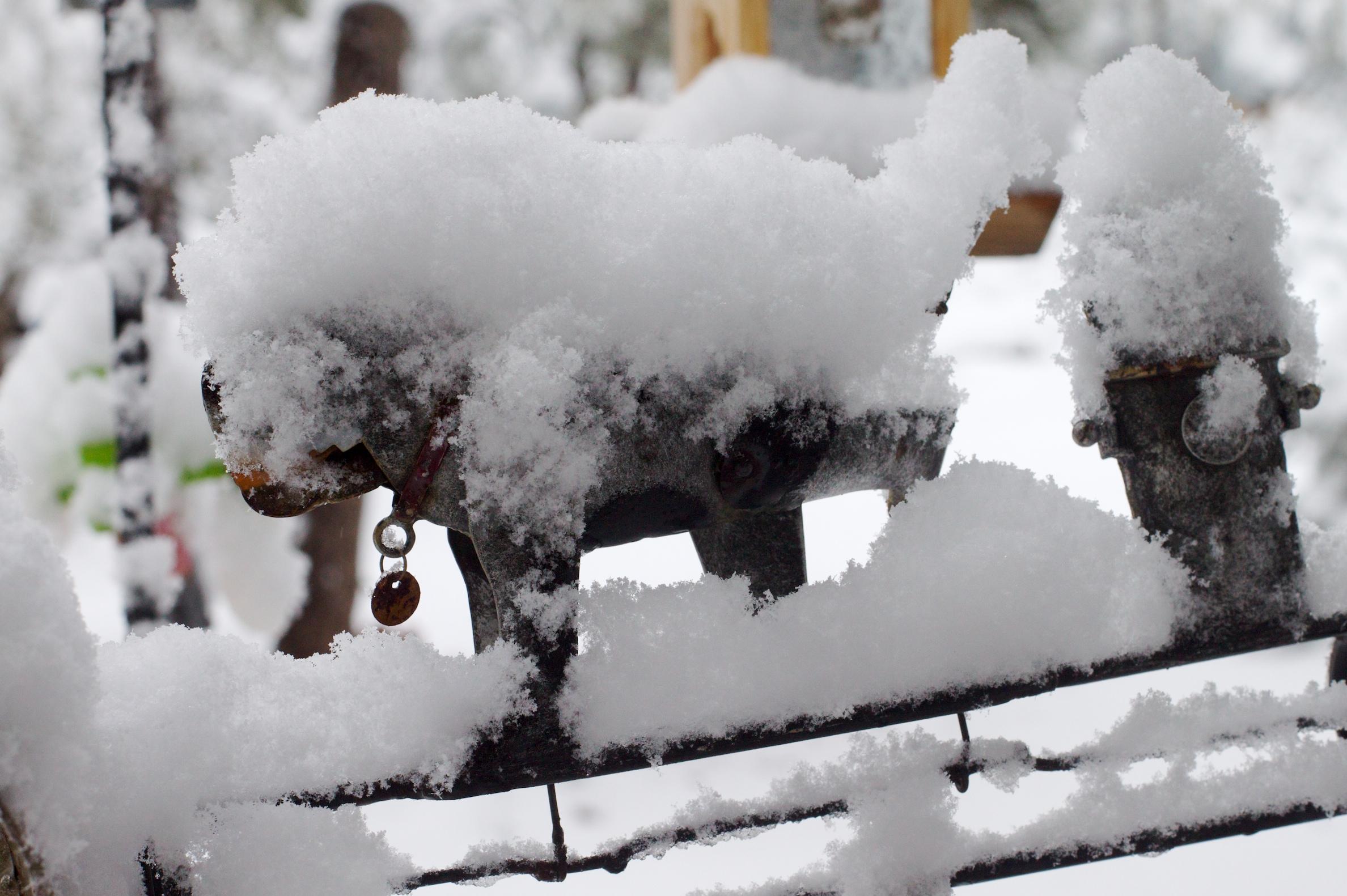 этой странице картинки со снежком тебя мужчин