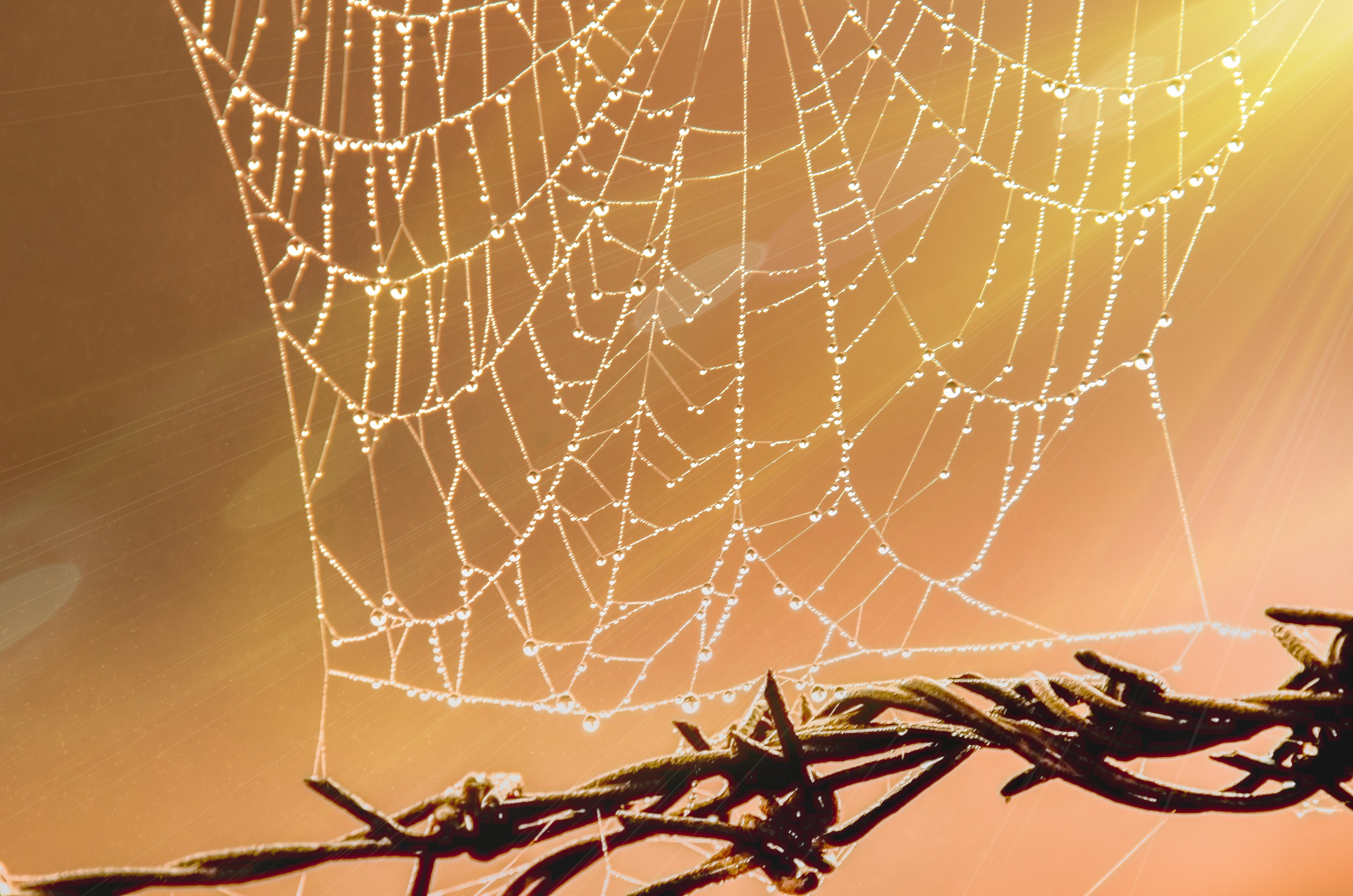 Free Images : spider web, light, branch