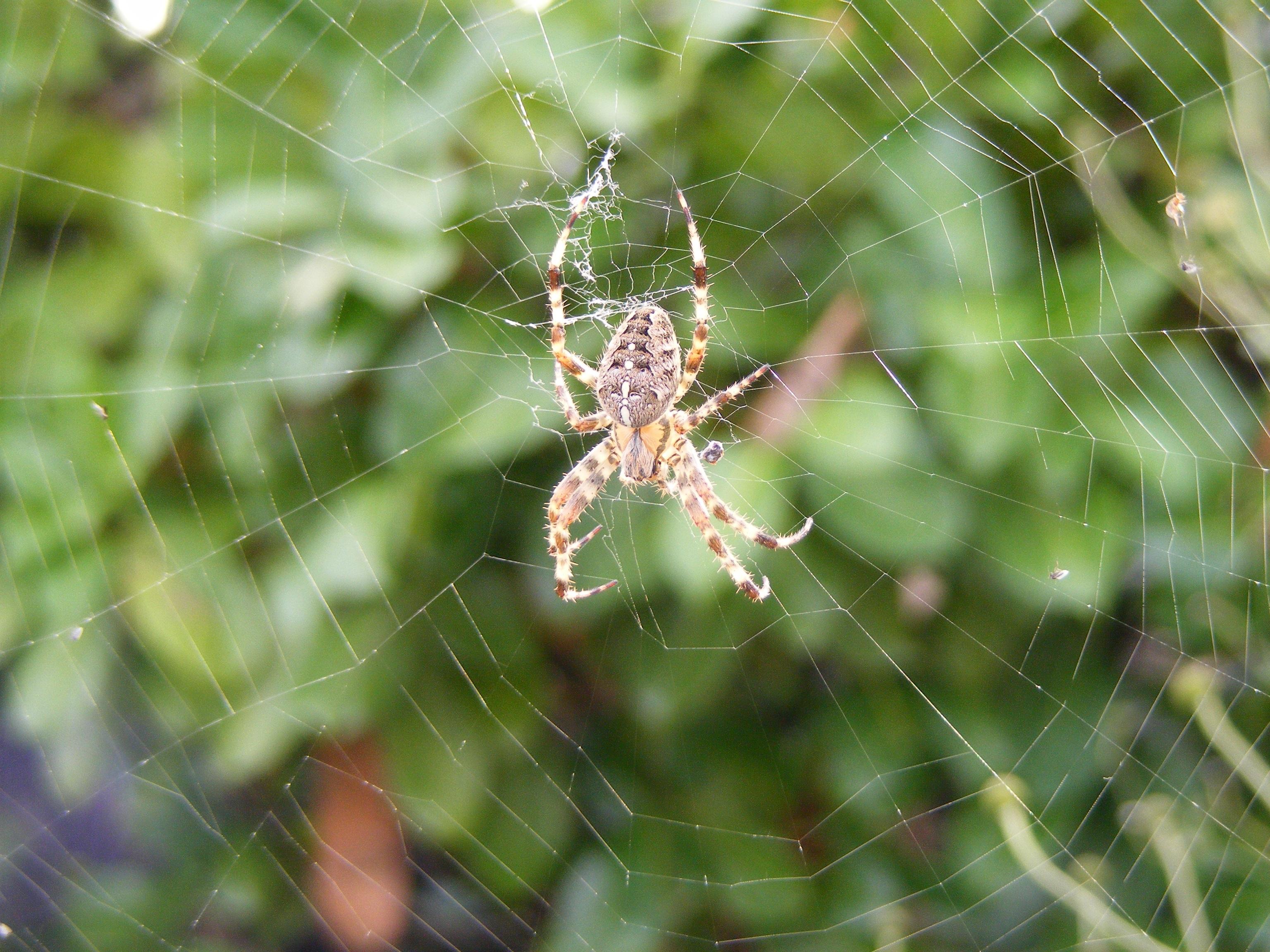 паук большой на паутине фото пойдет