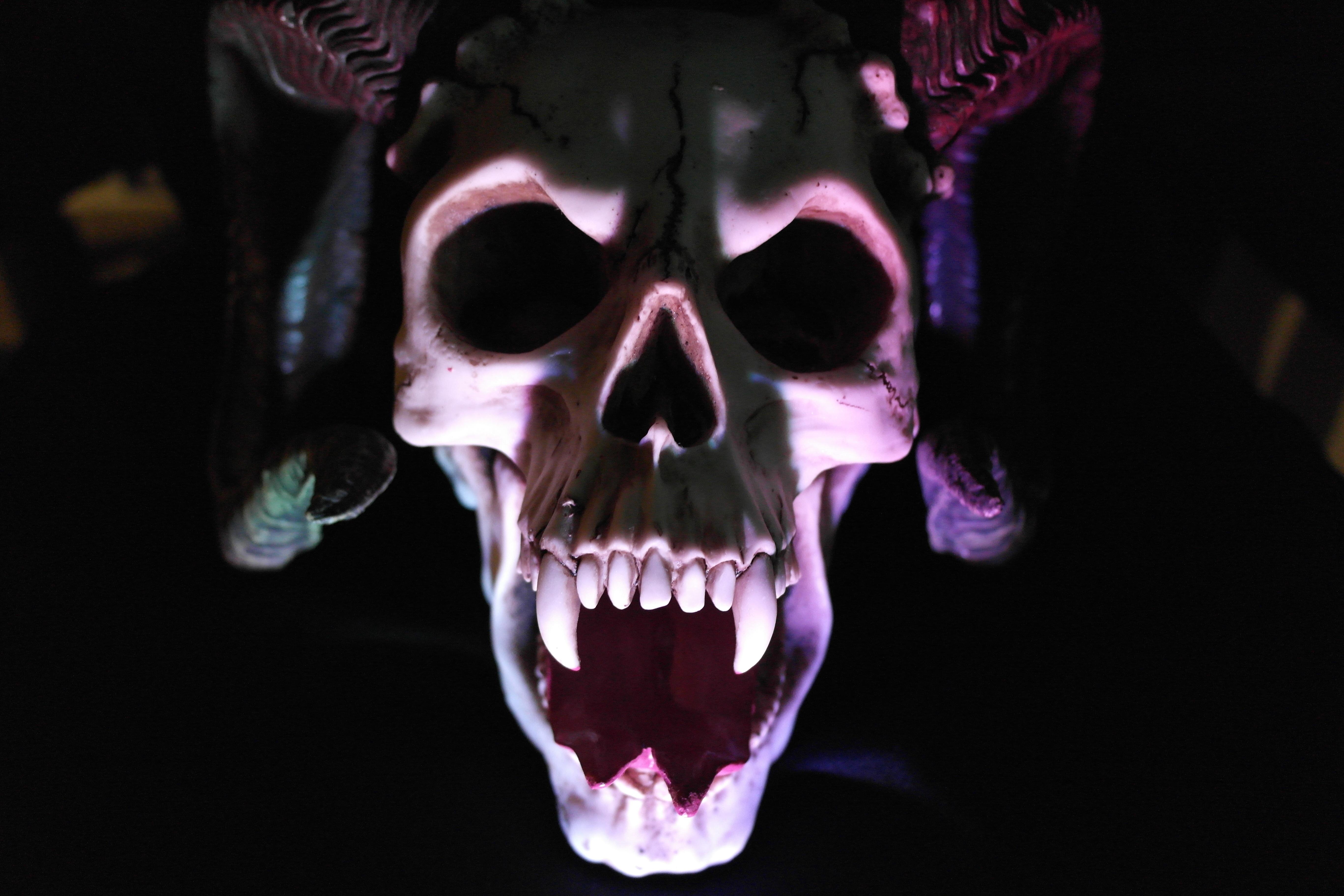 Images des os du visage