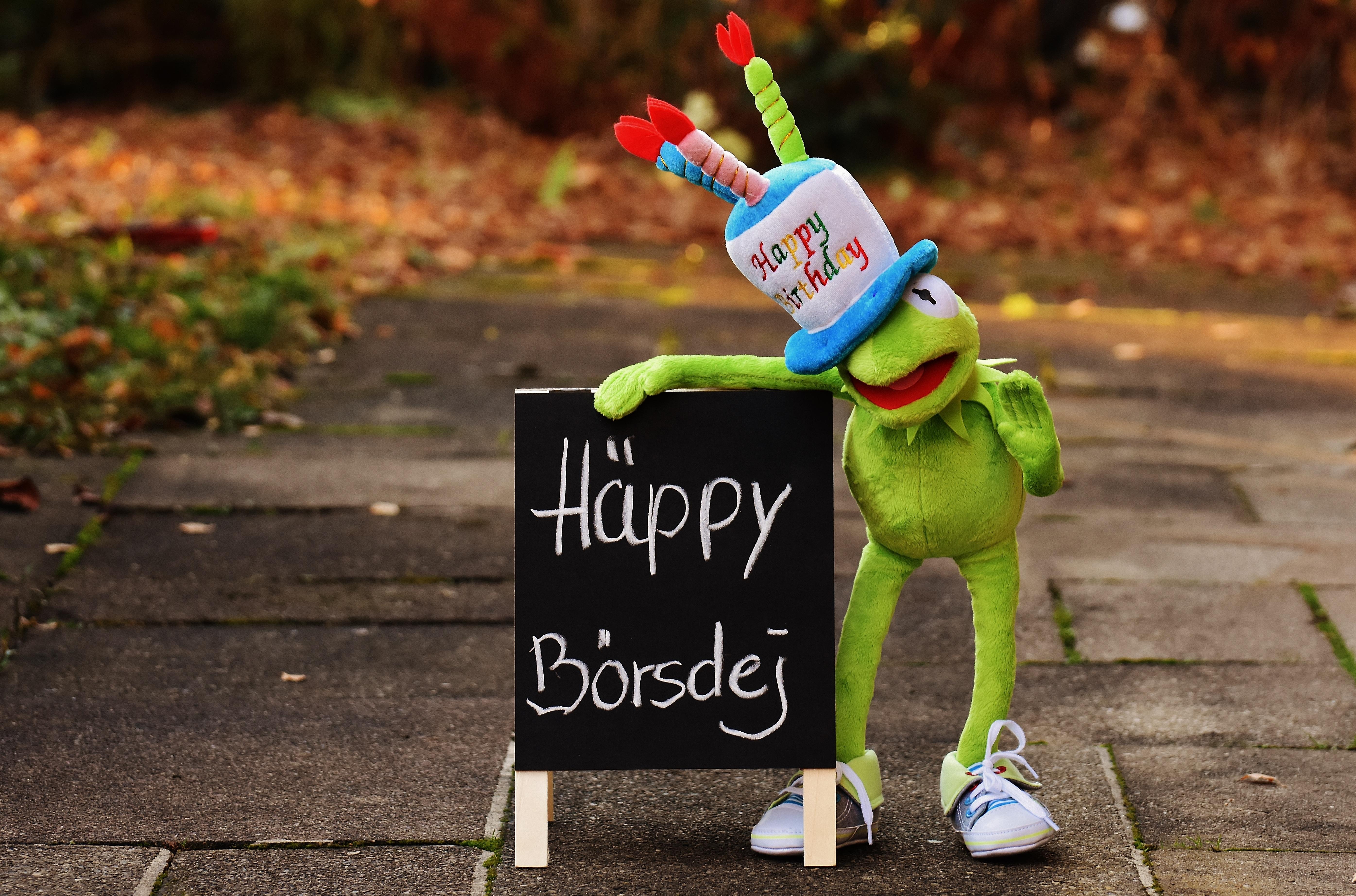 grattis på födelsedagen rolig Bakgrundsbilder : vår, grön, Färg, groda, Grattis på födelsedagen  grattis på födelsedagen rolig