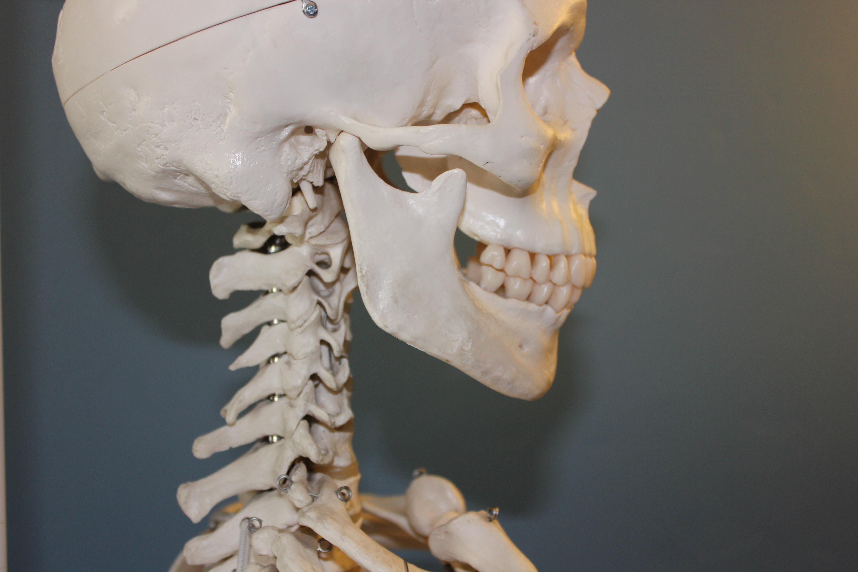 Free Images : statue, human, skull, bone, close up, face