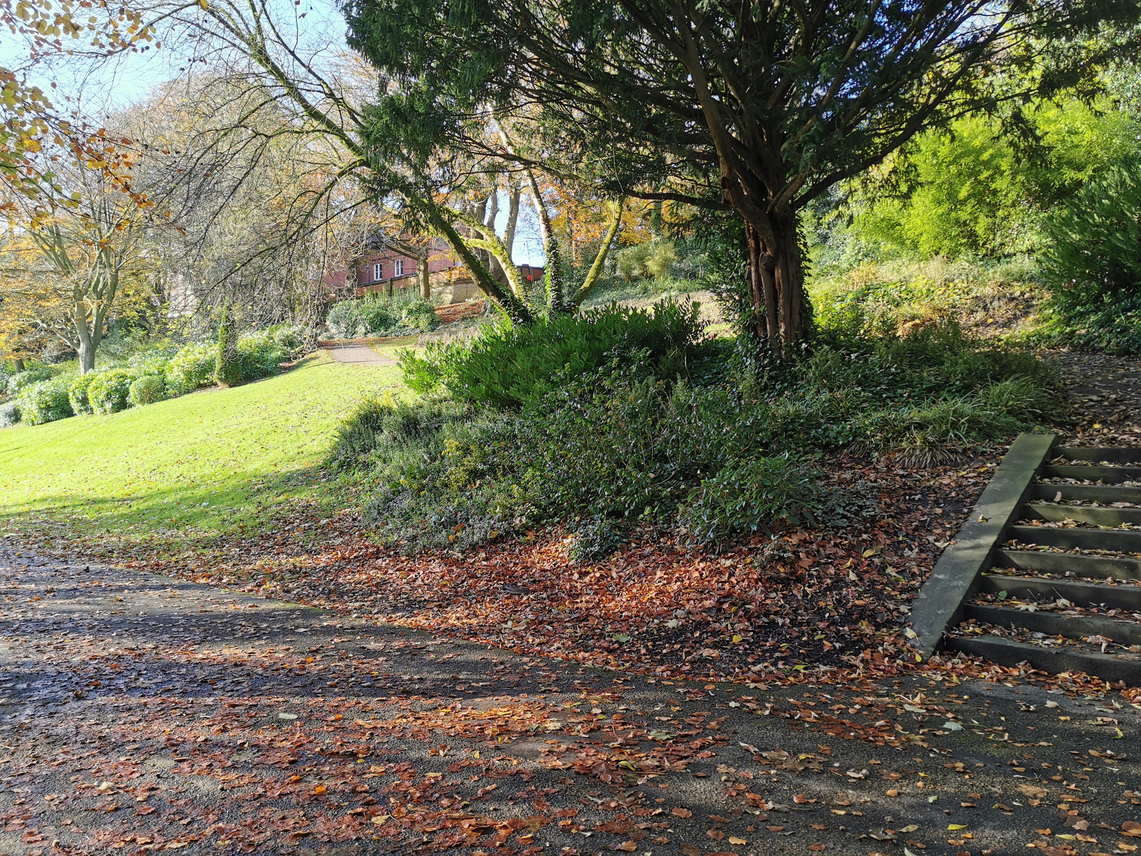 Free Images Steps Natural Landscape Tree Leaf Natural
