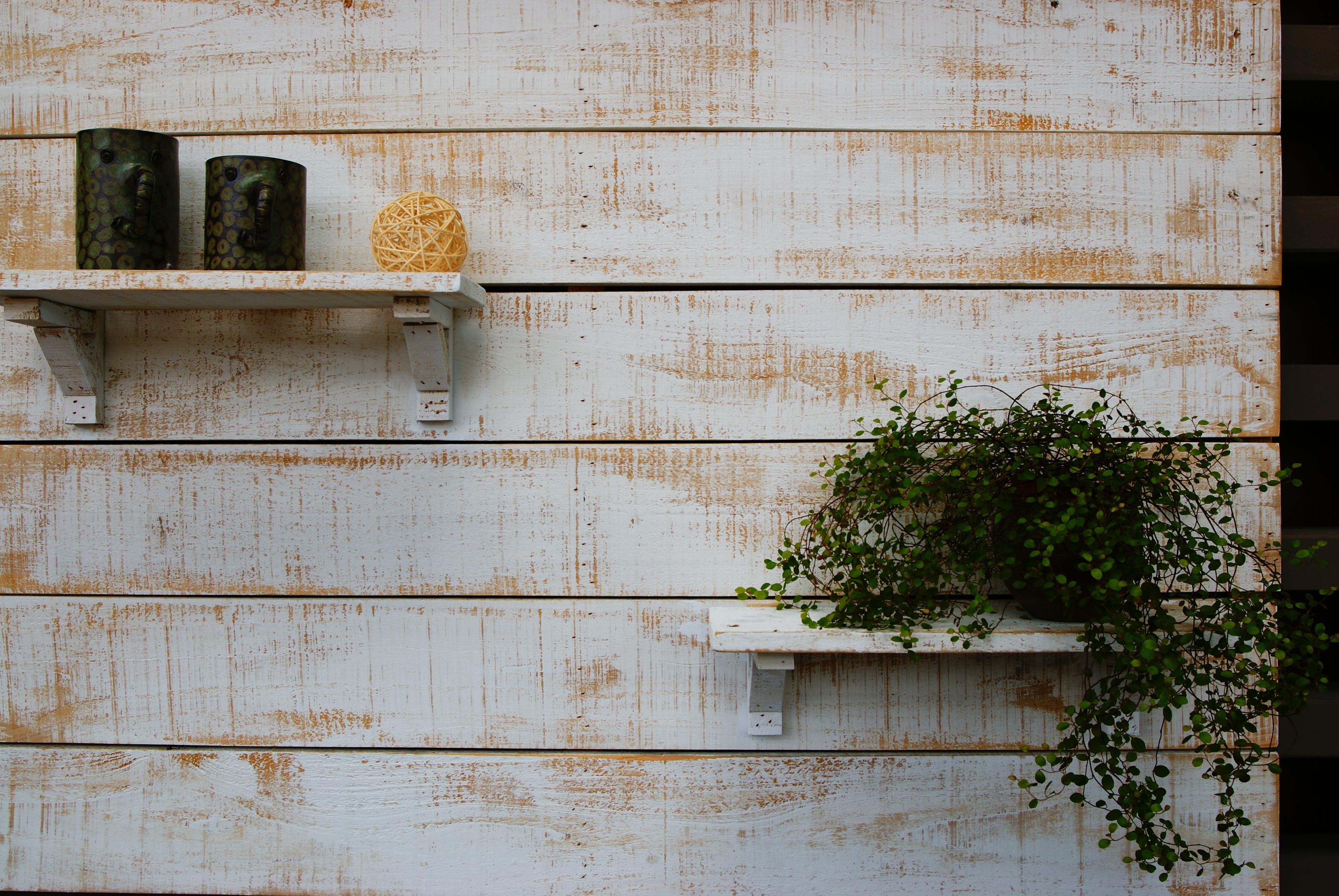Gratis Afbeeldingen : stilleven, potplanten, aanplant, mok, plank ...