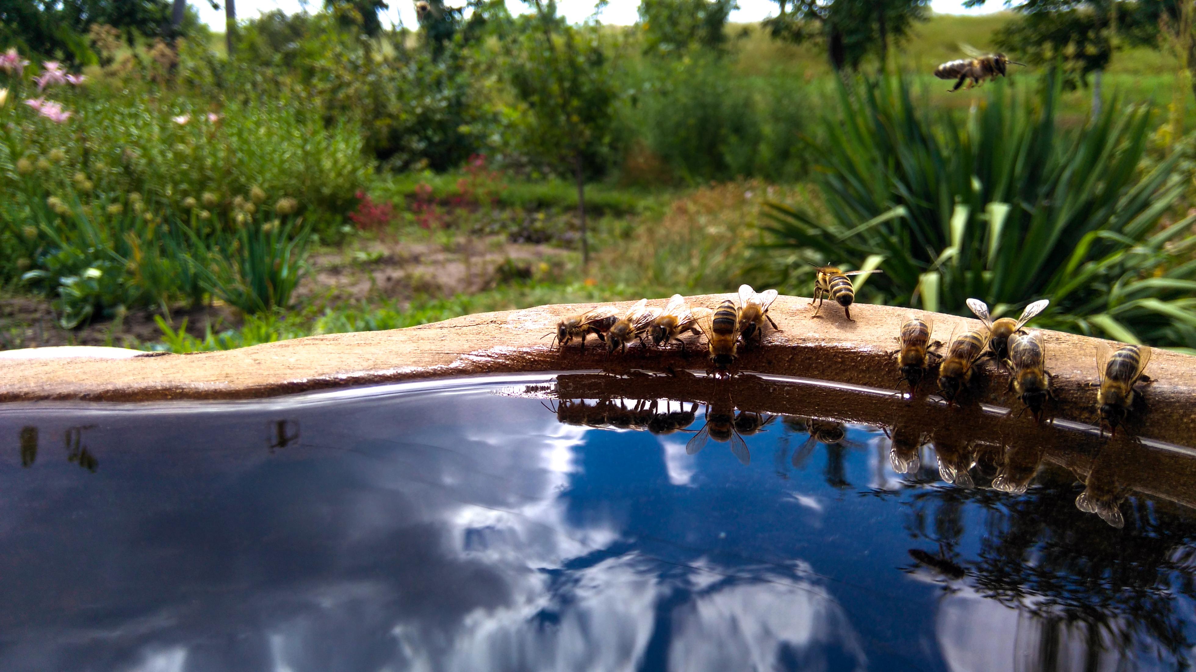 Fesselnd Steine Bienen Gras Blume Wasser Betrachtung Teich Pflanze Wasservorräte Pool  Wasser Funktion Baum Hinterhof Landschaft