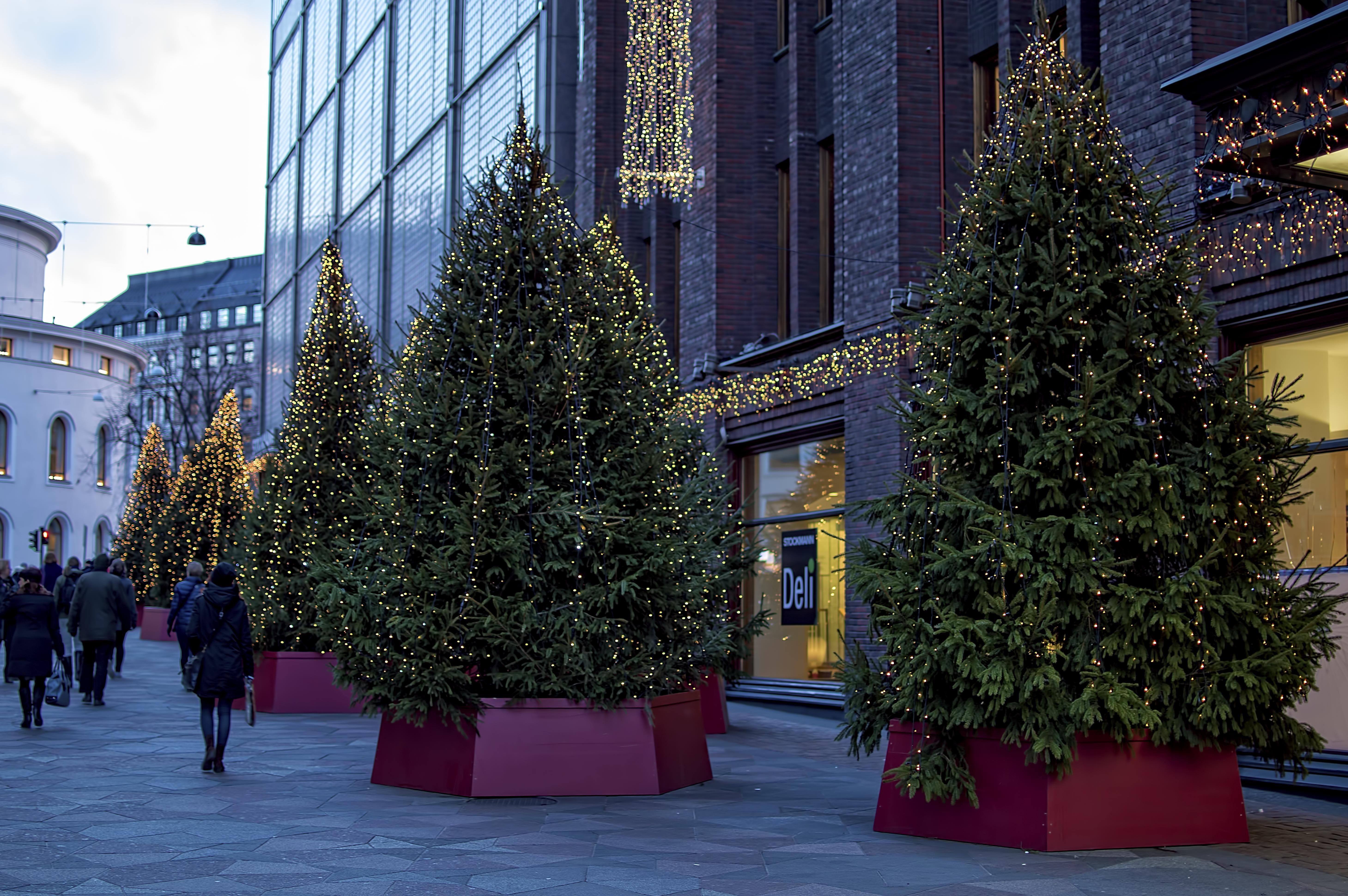 Finland Christmas Decorations.Free Images Store Christmas Season Festive Trees