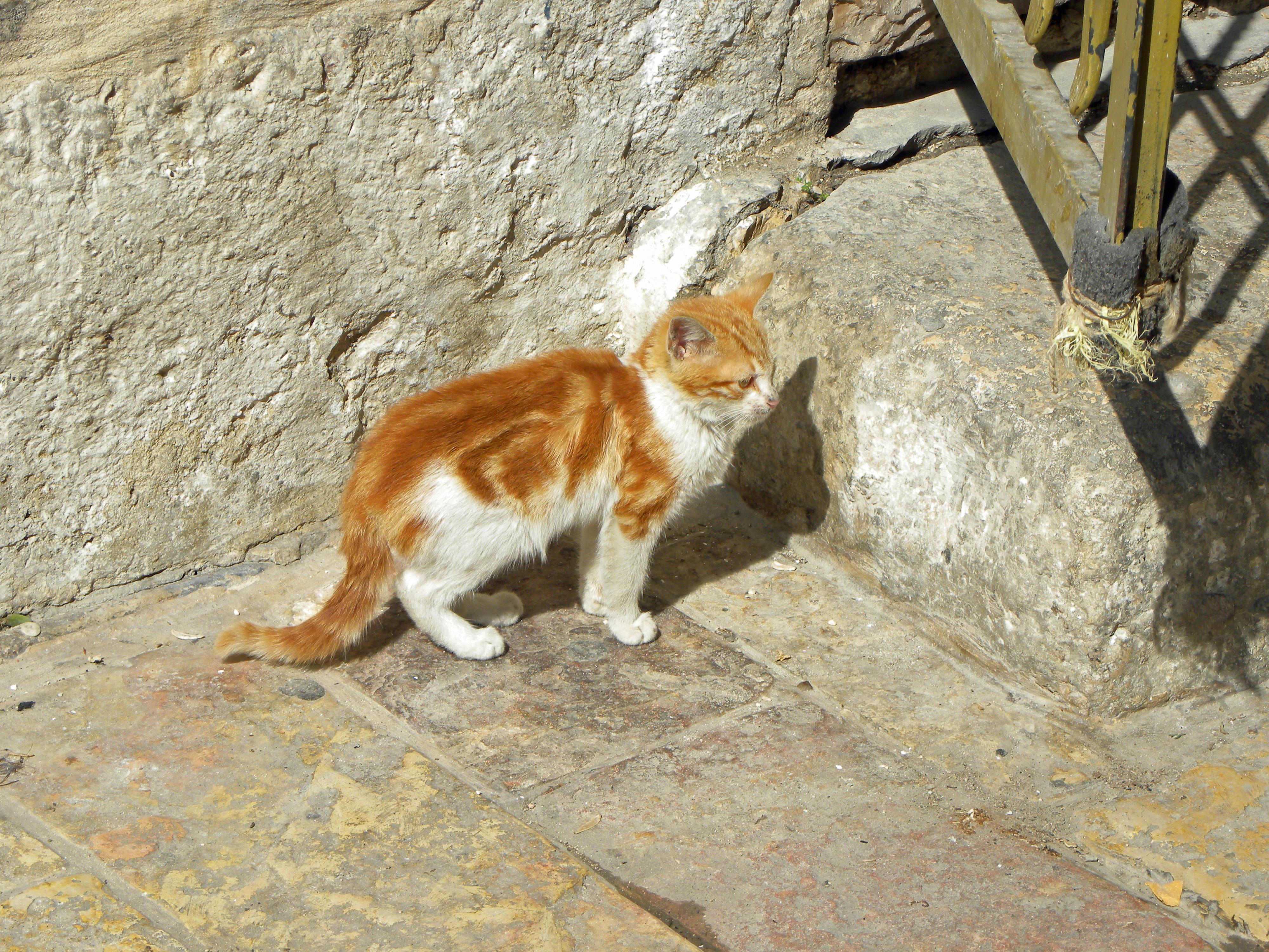 66+ Gambar Hewan Kucing Batu Terbaik