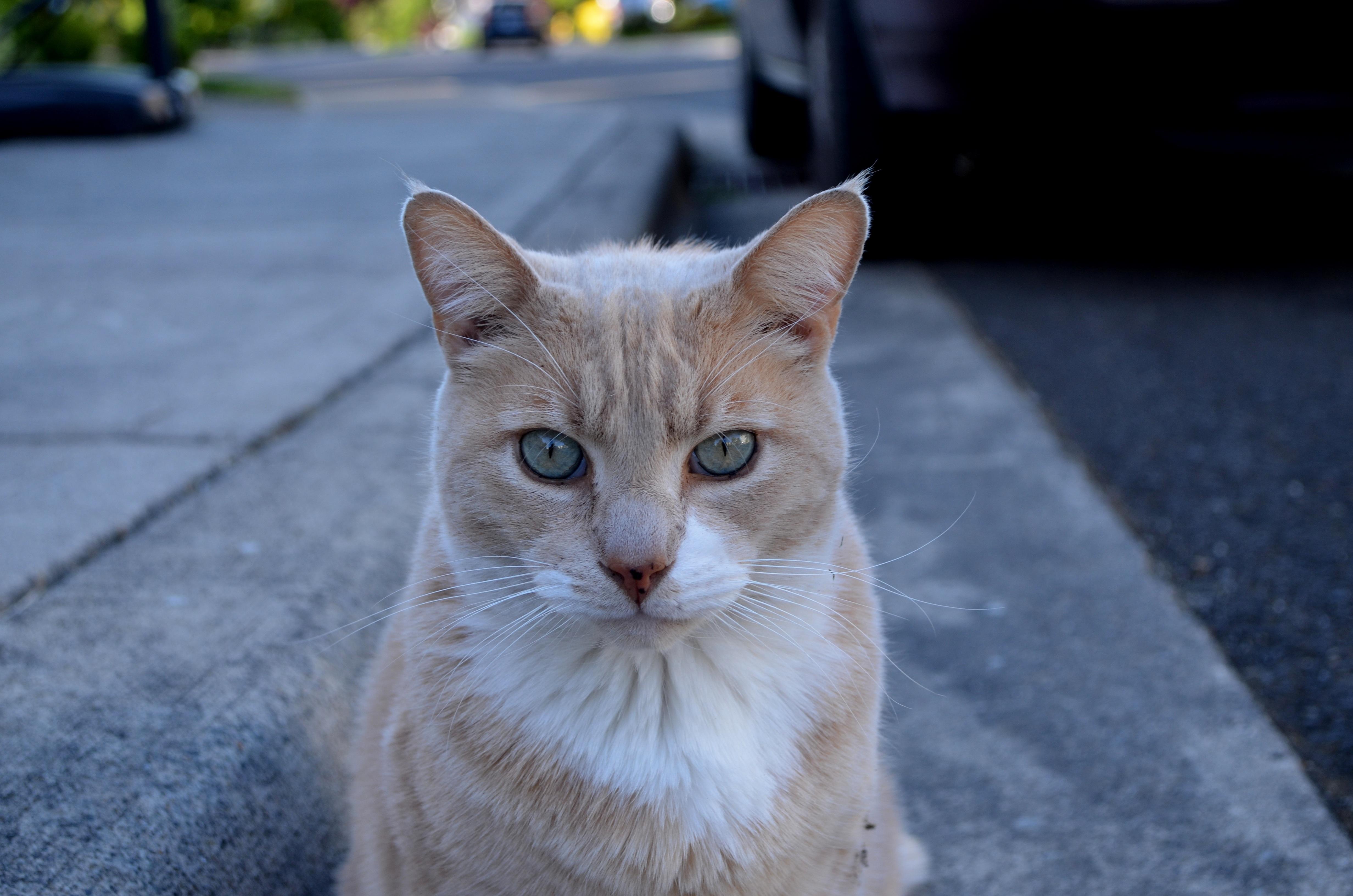 freeyoung mačička