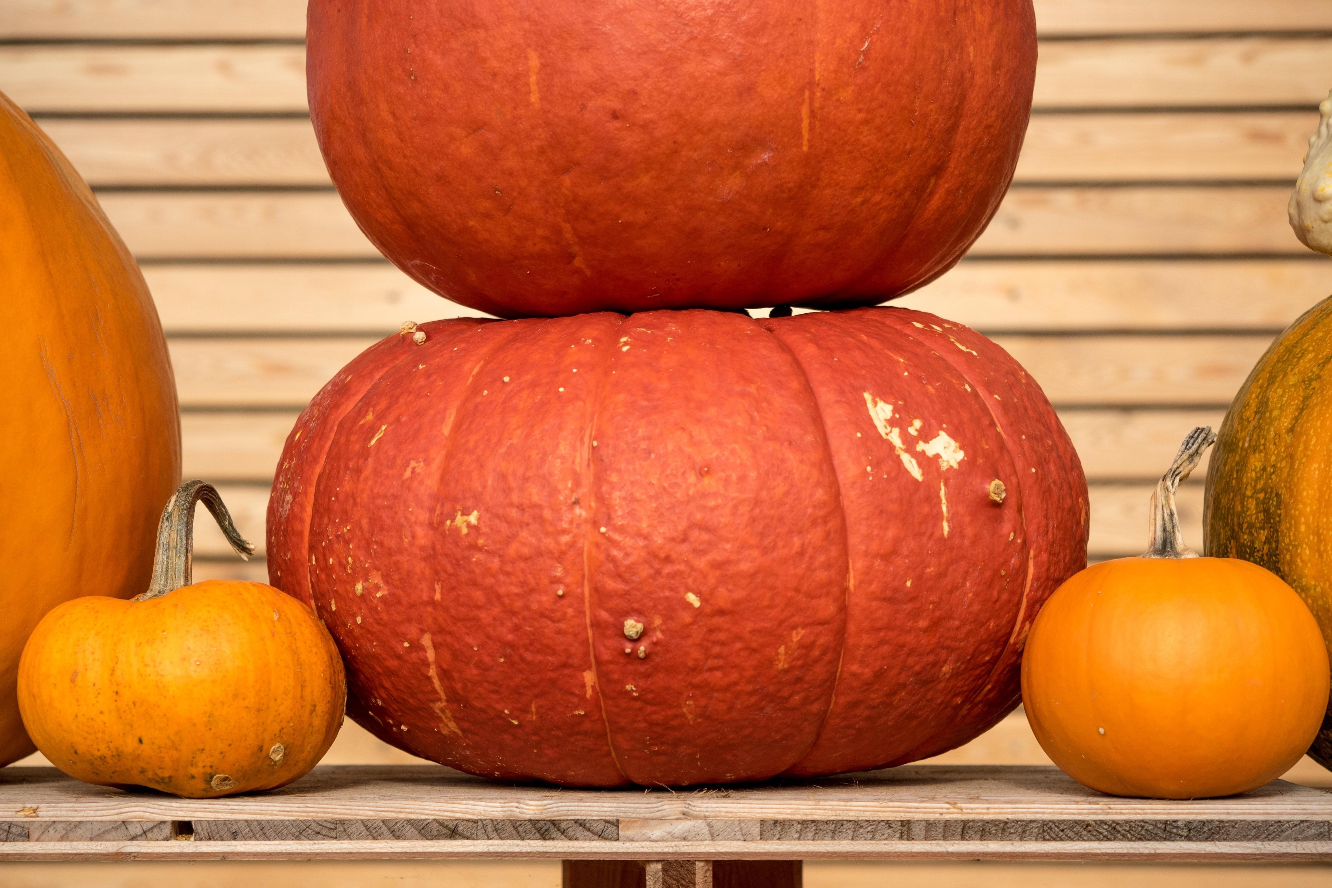 free images structure decoration orange food golden harvest