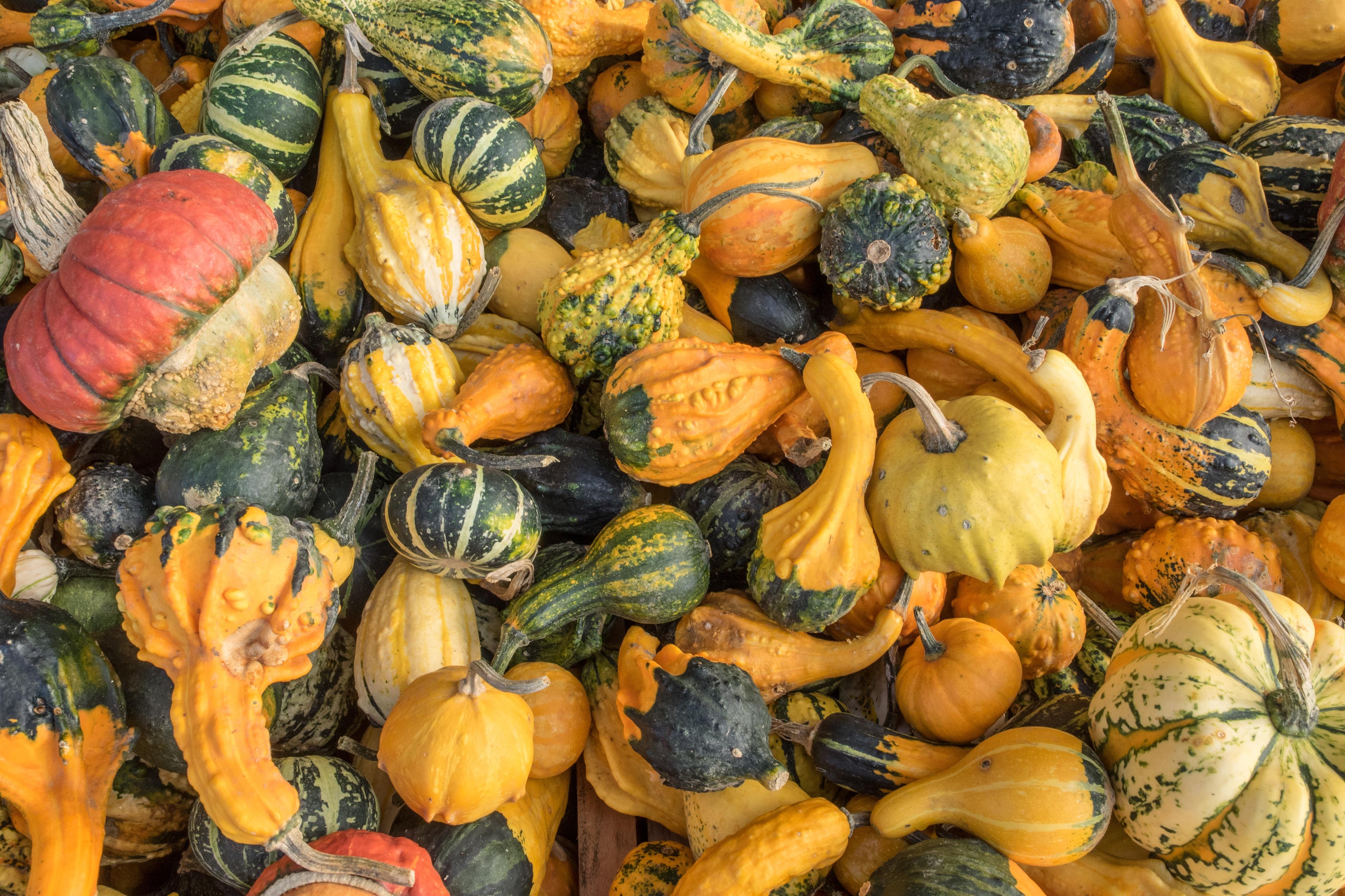 Free Images : structure, fruit, decoration, orange, food, golden ...