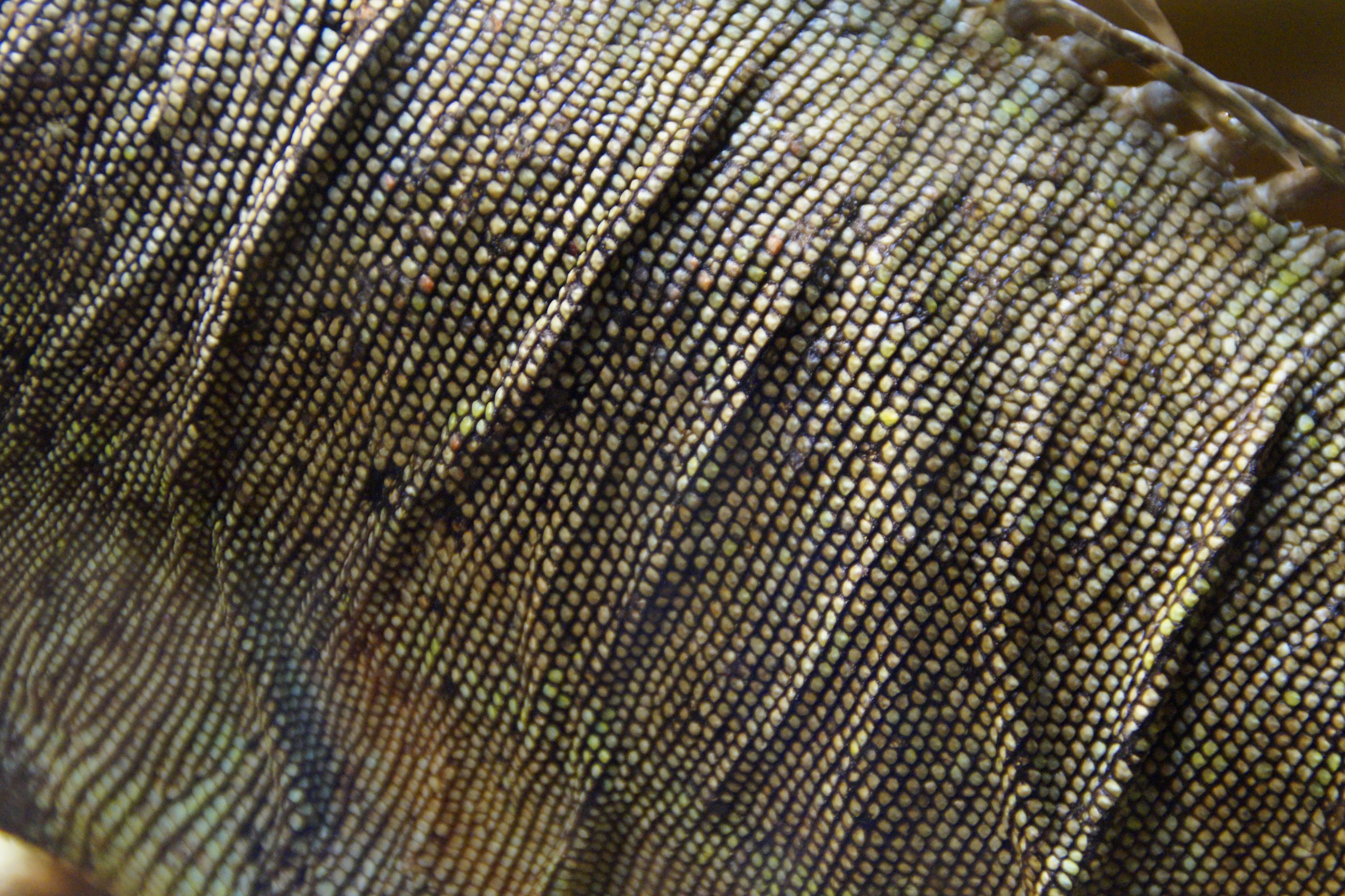 Kostenlose foto : Struktur, Textur, Muster, Reptil, Rahmen ...