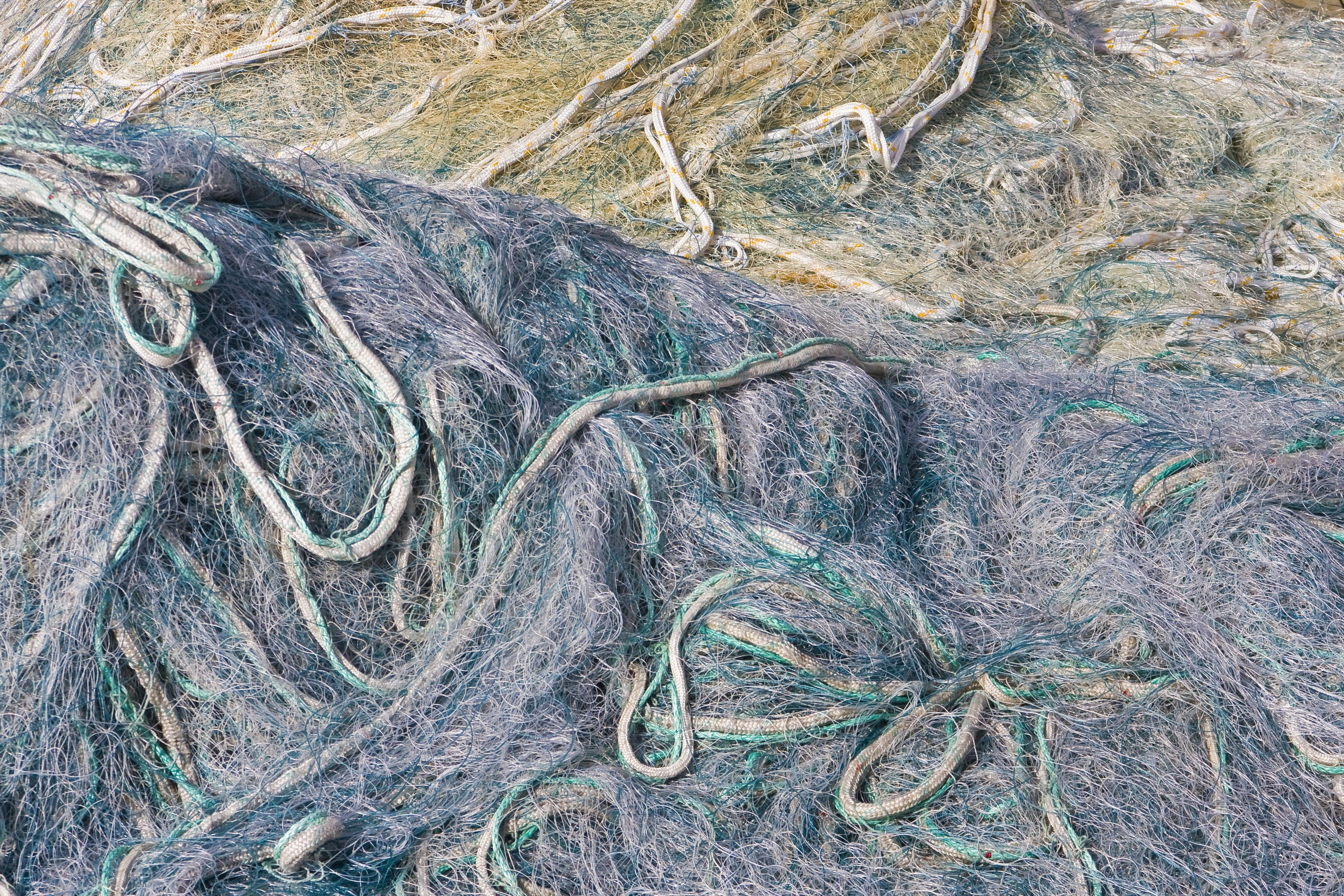 Gambar Struktur Tekstur Rumput Laut Akar Seni Latar