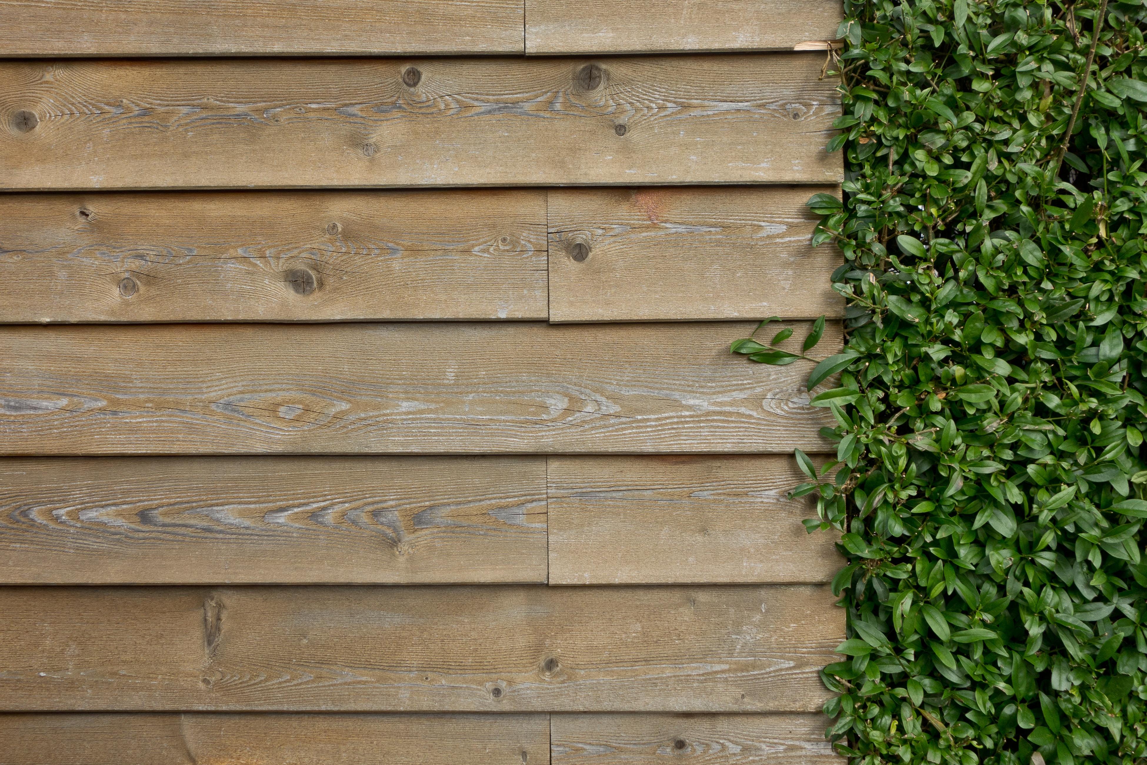 Free Images Structure Grain Texture Floor Ivy