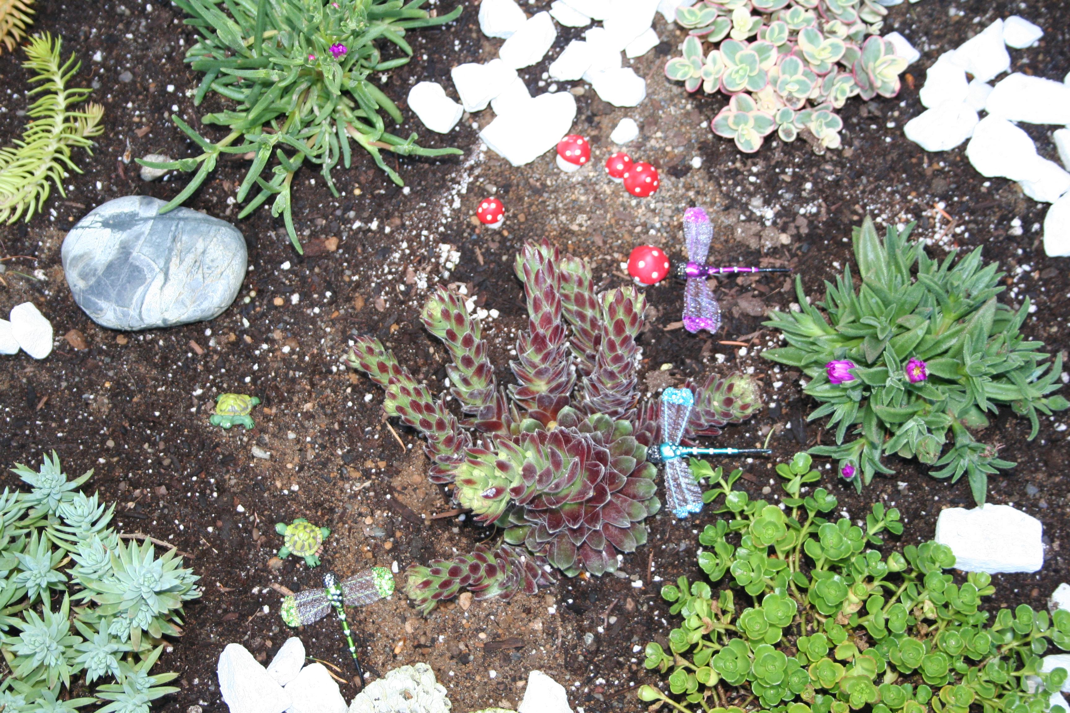 Images Gratuites Succulentes Jardin Miniature Libellules Plante