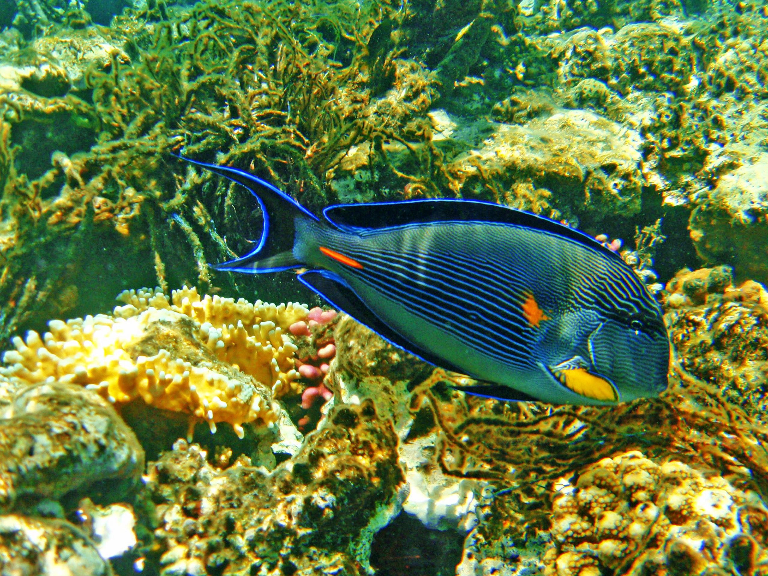 Images gratuites t sous marin la biologie poisson for Poisson rouge vacances nourriture