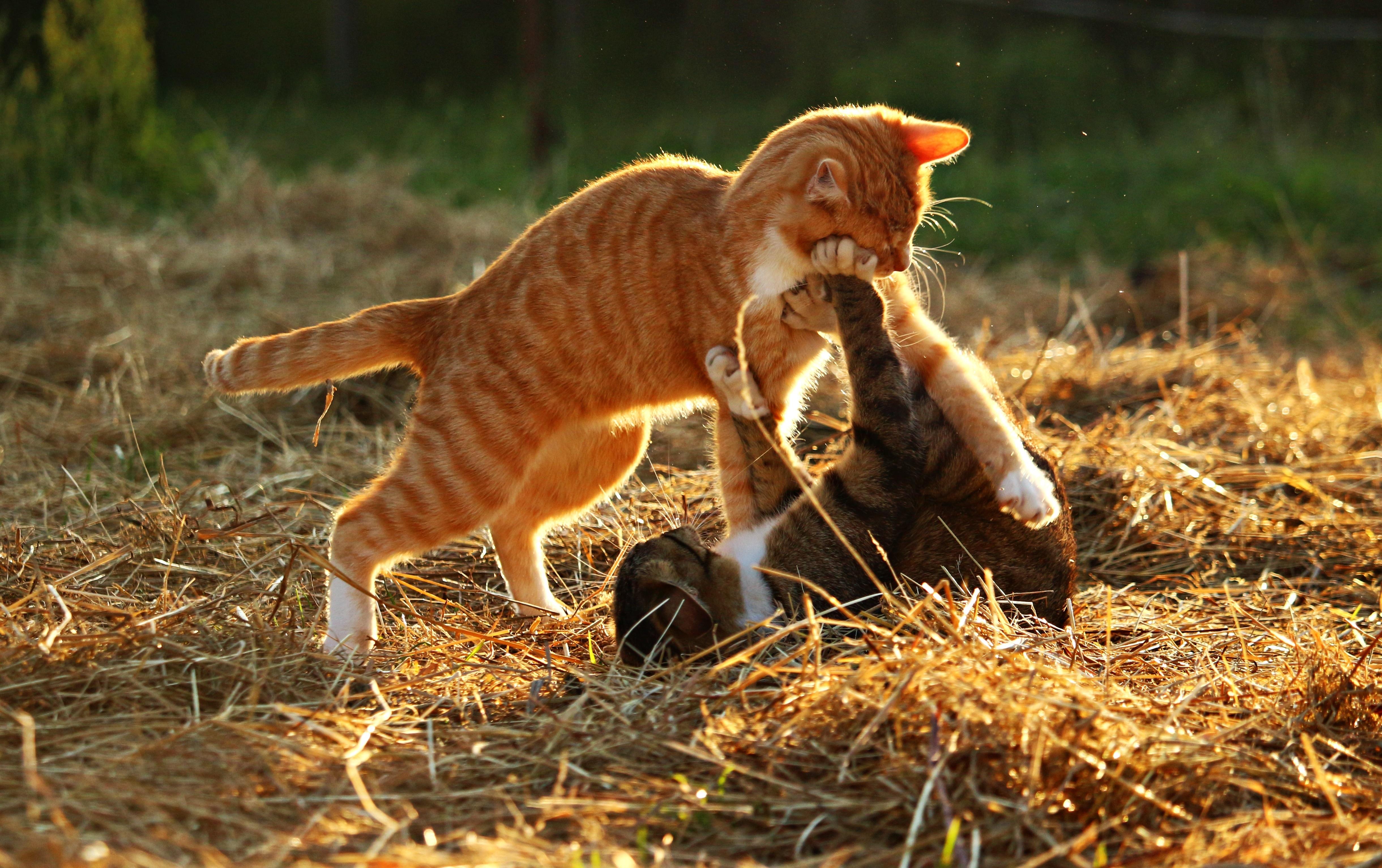 новости кемерова картинки игры с котятами та-же беда
