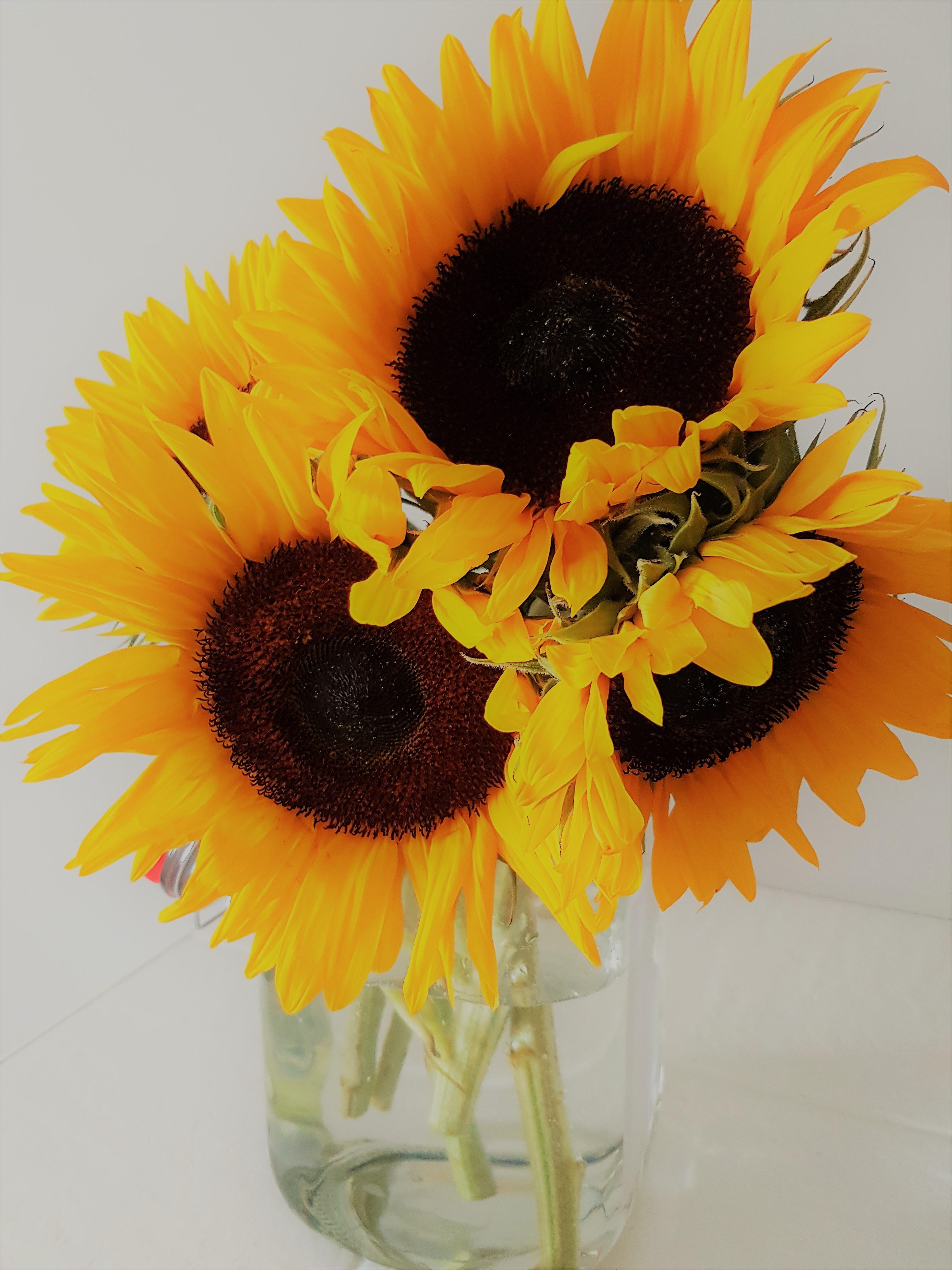 images gratuites : jaune, fleurs coupées, graines de tournesol