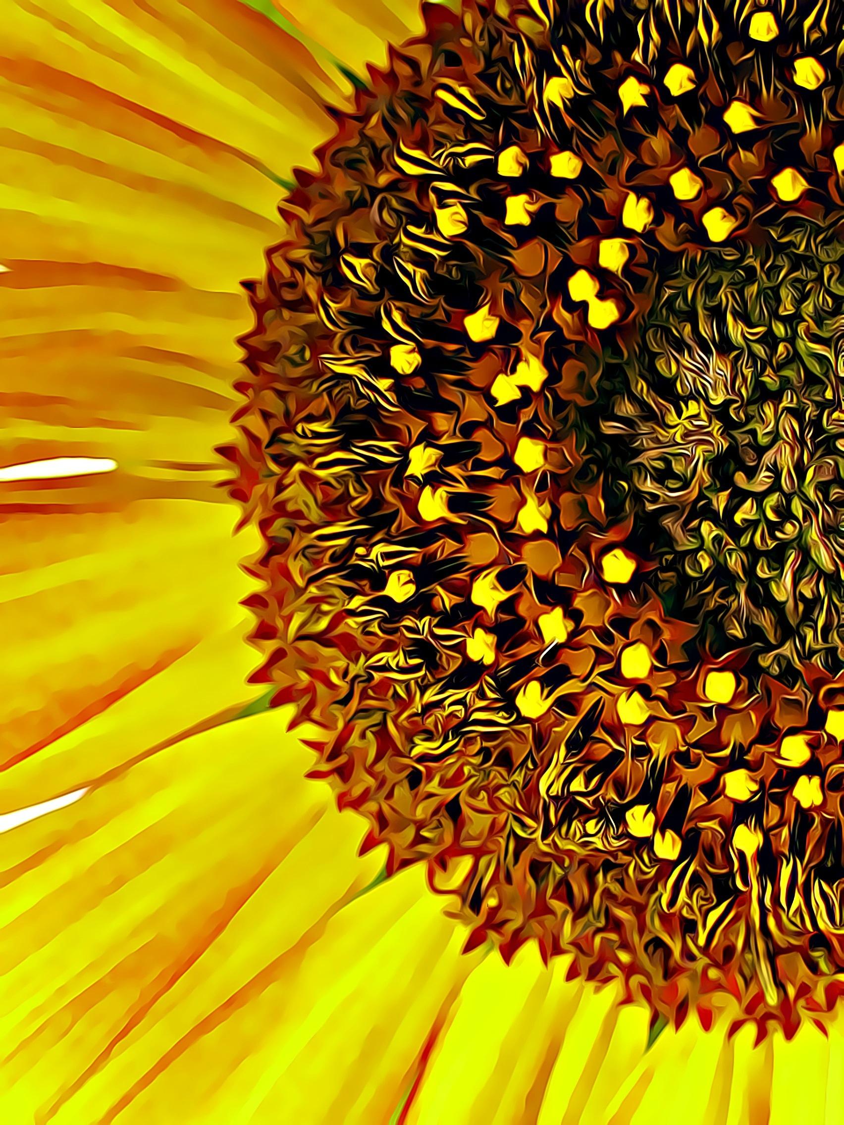 Free images sunflower stamen pistil summer flowers summer sunflower stamen flower pistil summer flowers plants summer plants plant yellow flower mightylinksfo