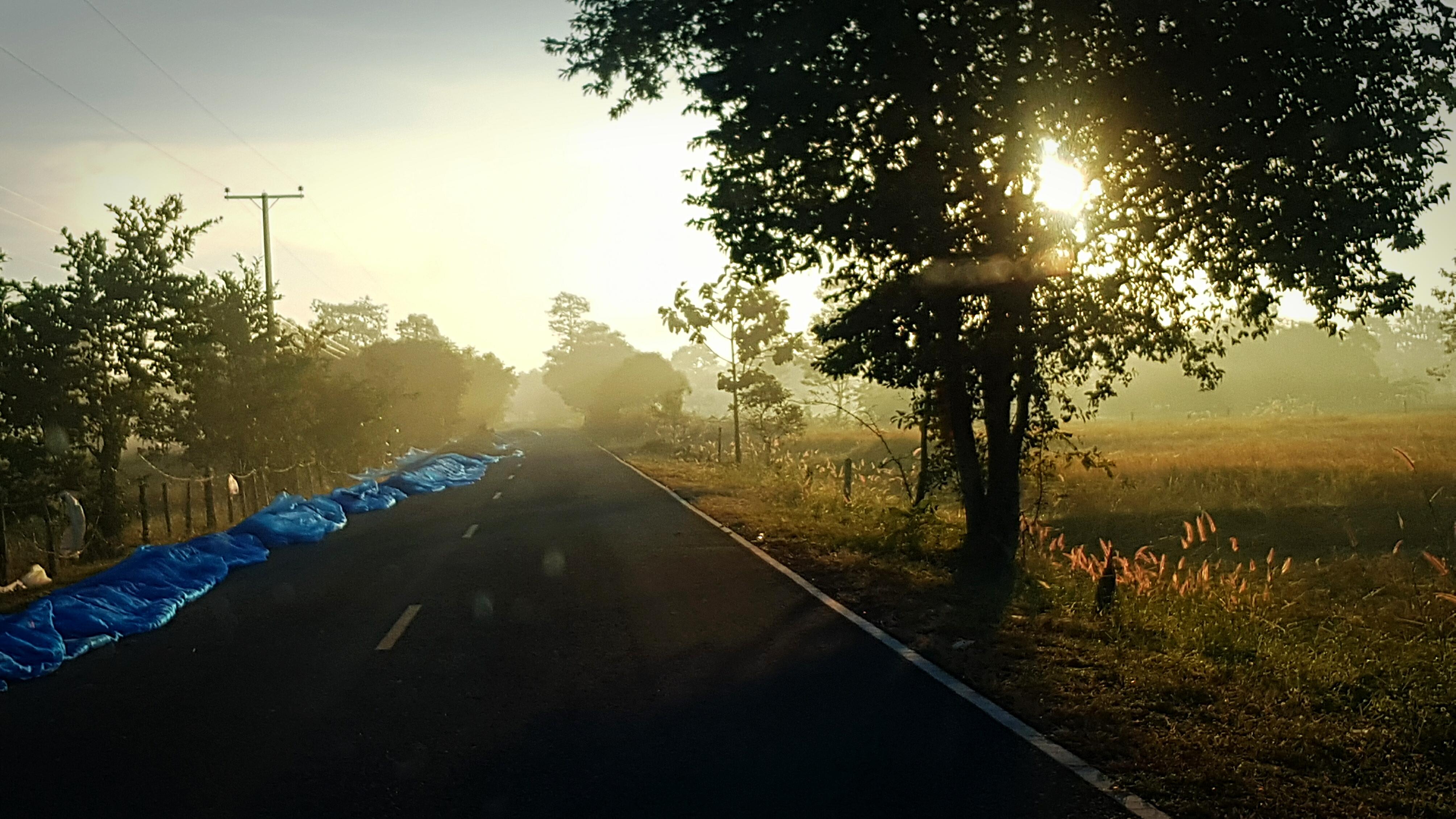 Gambar : sinar matahari, cahaya, melalui, pagi, sawah, panen